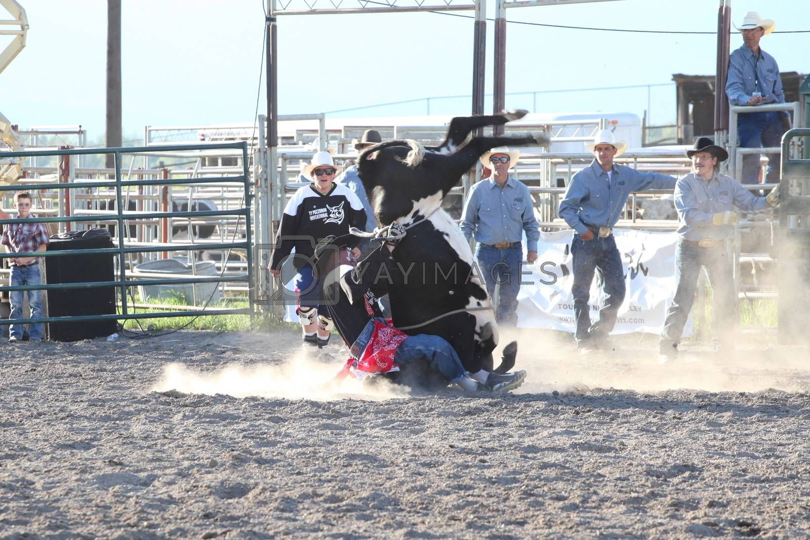 MERRITT; B.C. CANADA - May 30; 2015: Steer Rider The 3rd Annual Ty Pozzobon Invitational PBR Event.