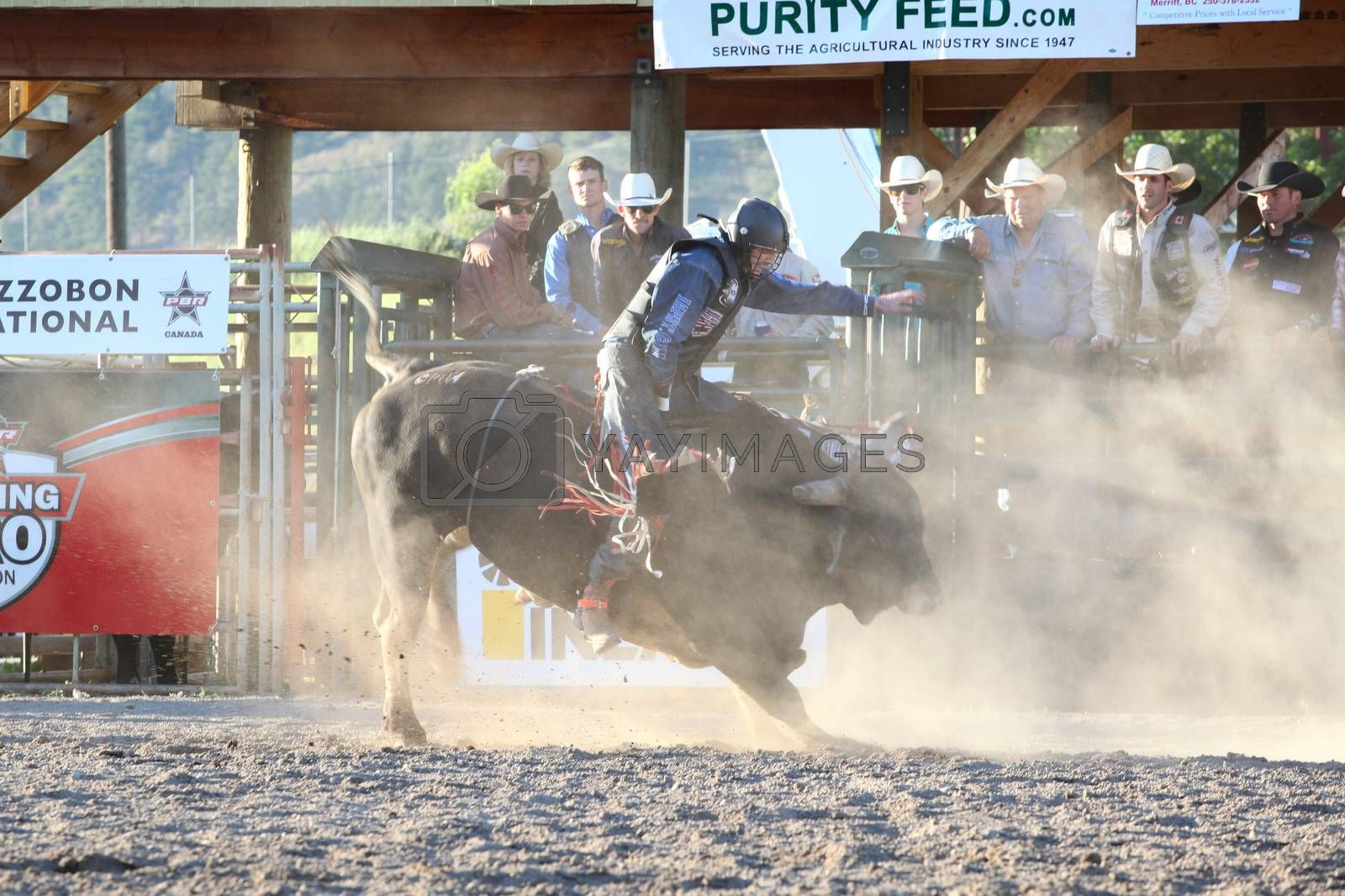 MERRITT, B.C. CANADA - May 30, 2015: Bull rider riding in the final round of The 3rd Annual Ty Pozzobon Invitational PBR Event.