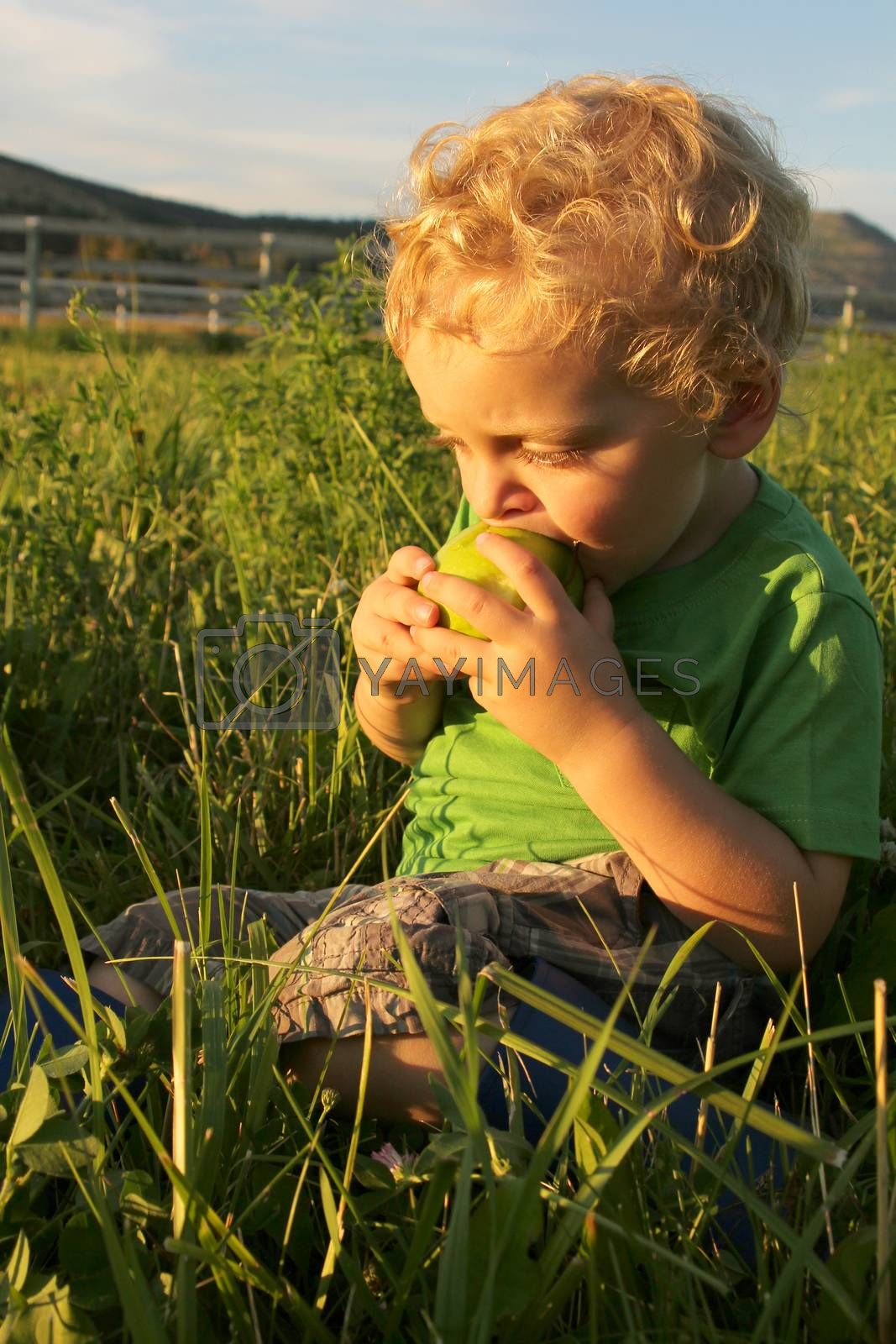 Blonde toddler boy playing outside in the field