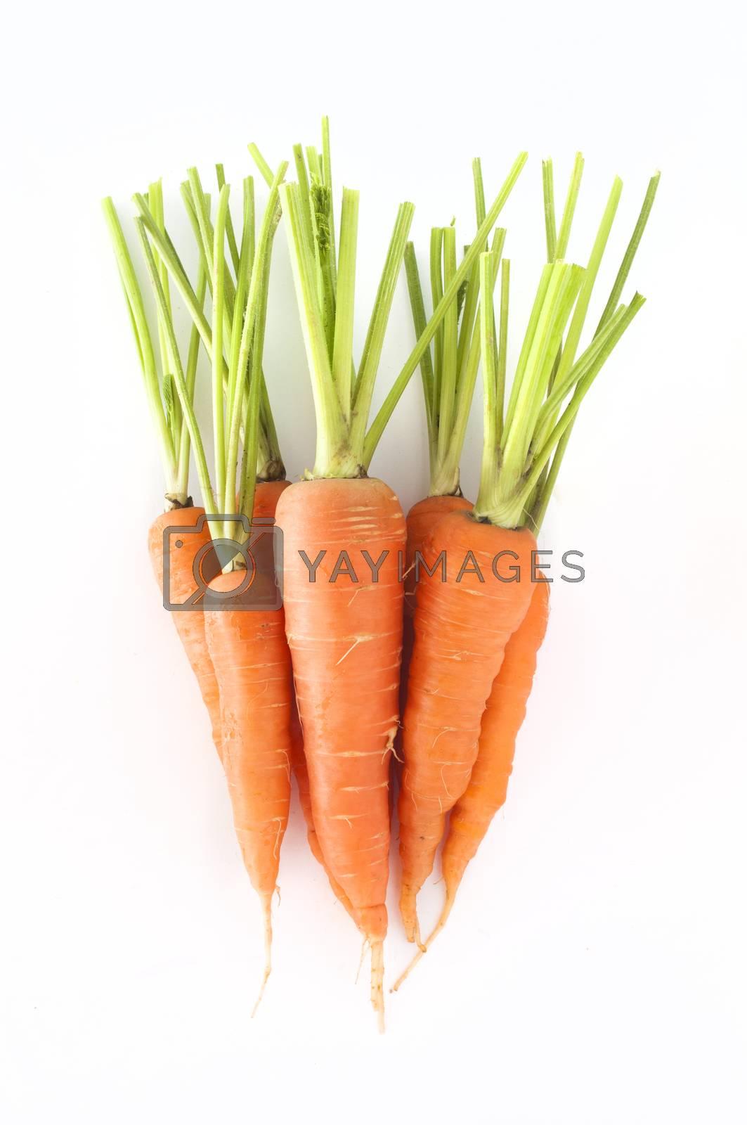 Carrots fresh on white backgraund