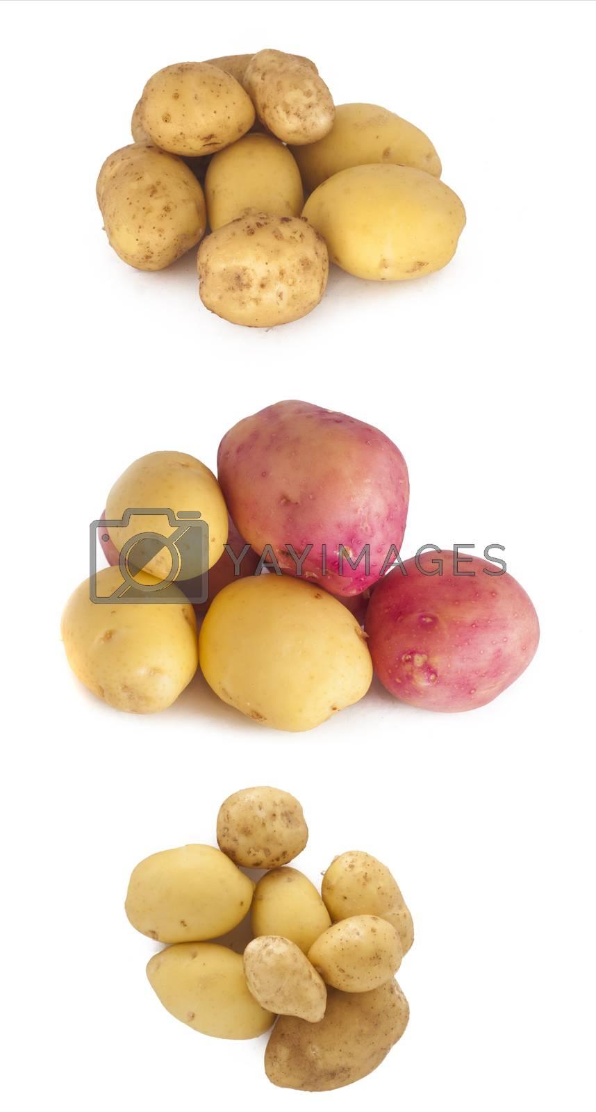 Potato by Almir