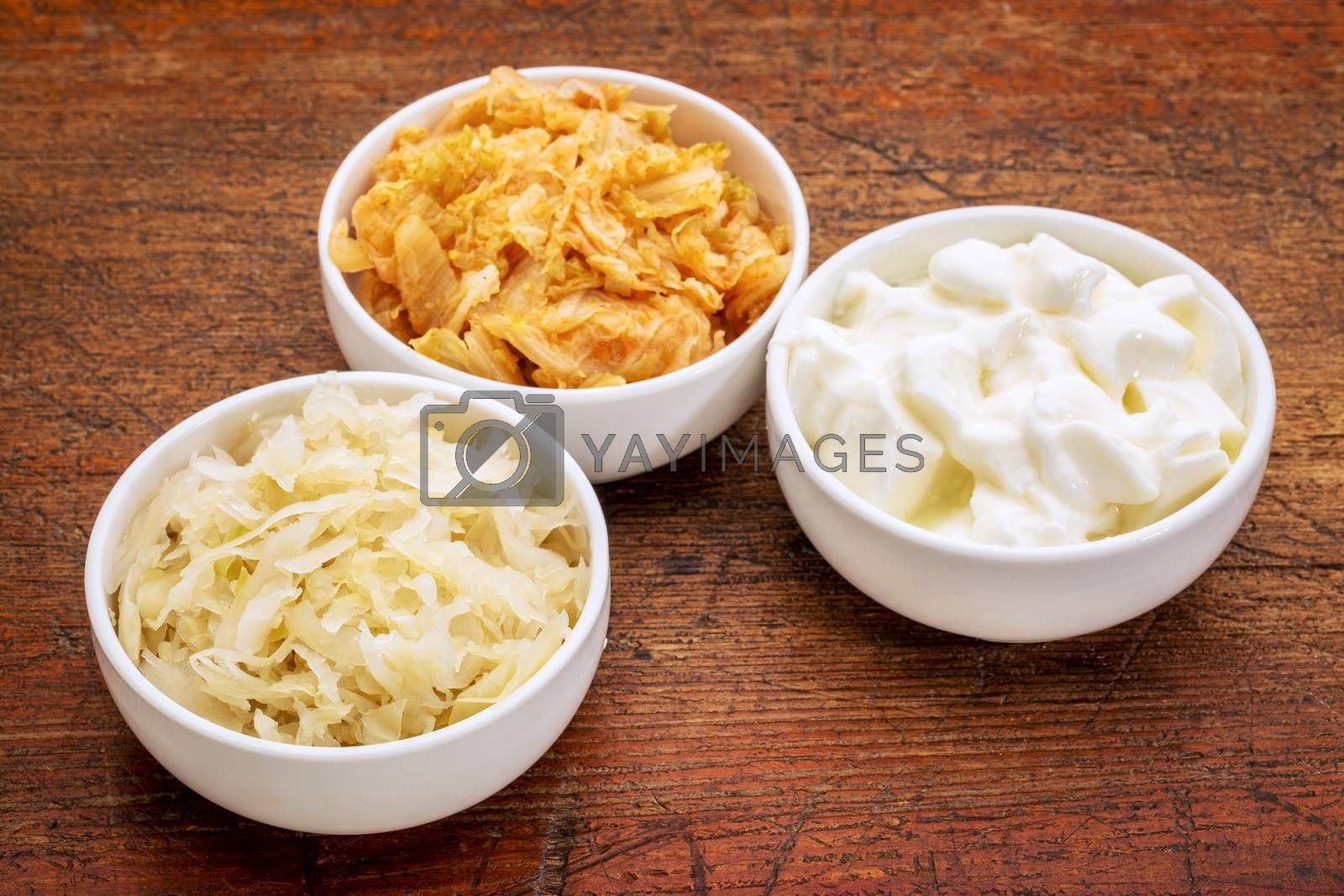 sauerkraut, kimchi and yogurt - popular probiotic fermented food - three ceramic bowl against rustic wood