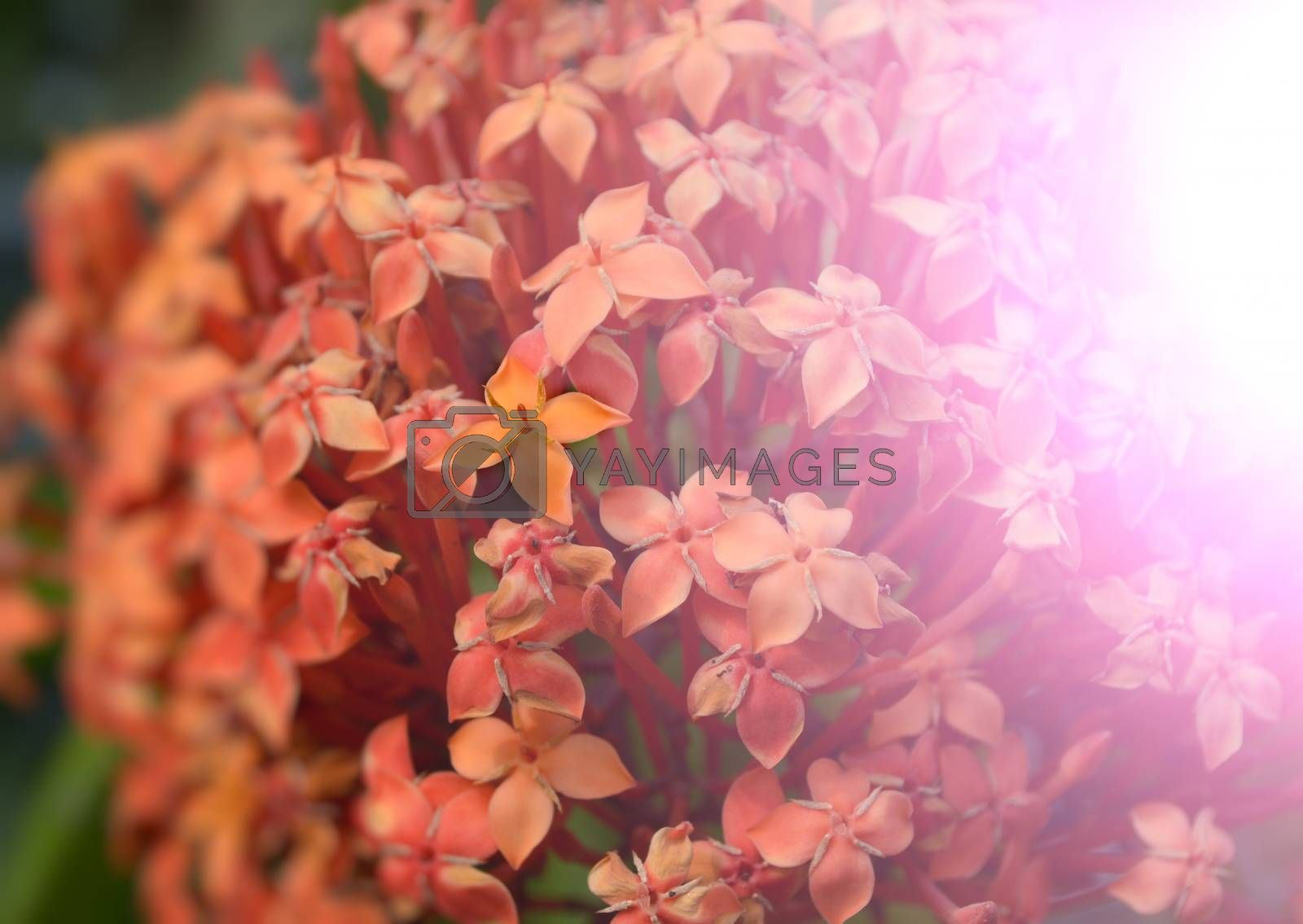 Flowers in the garden captured very closeup with sunlight