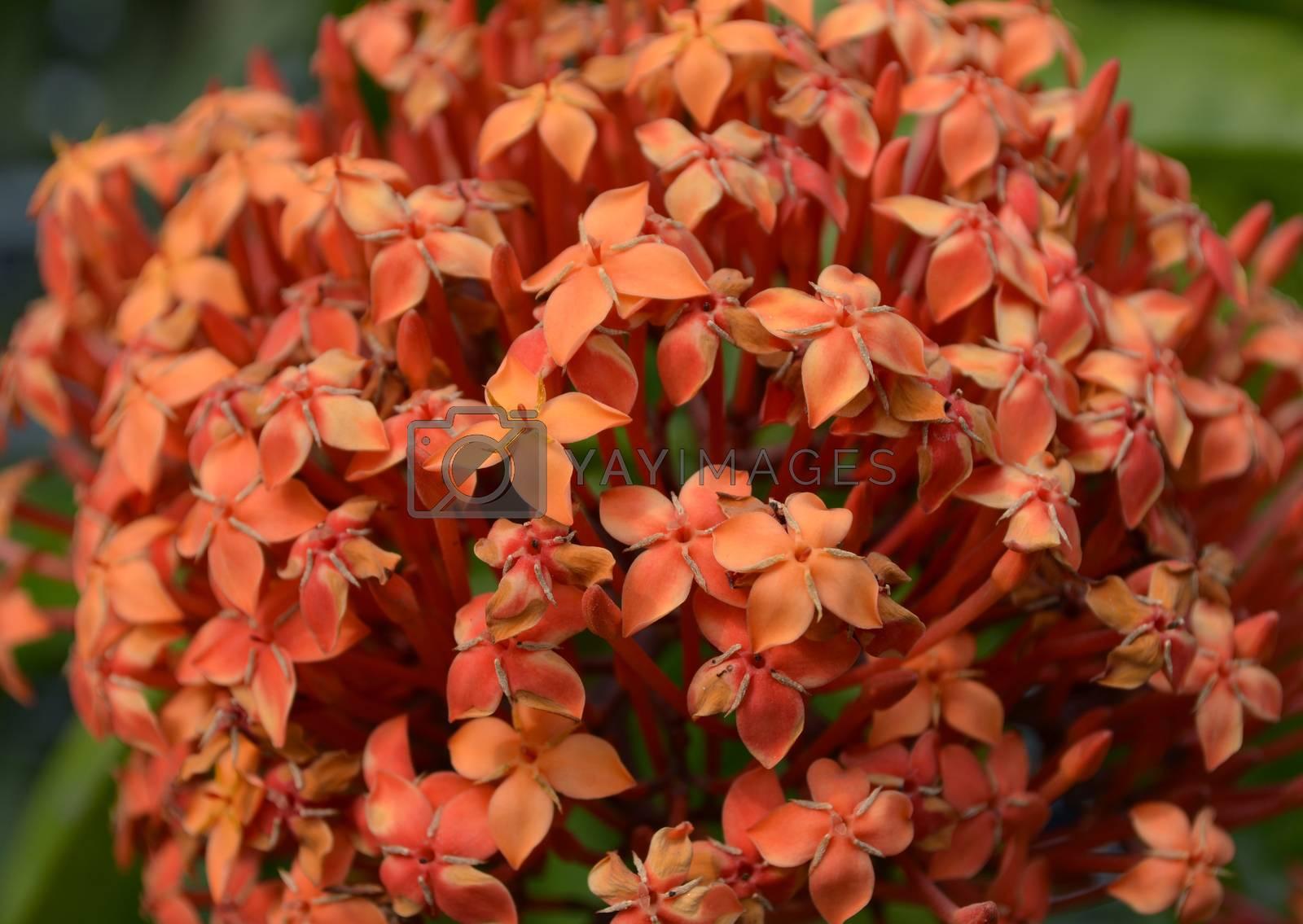 Flowers in the garden captured very closeup