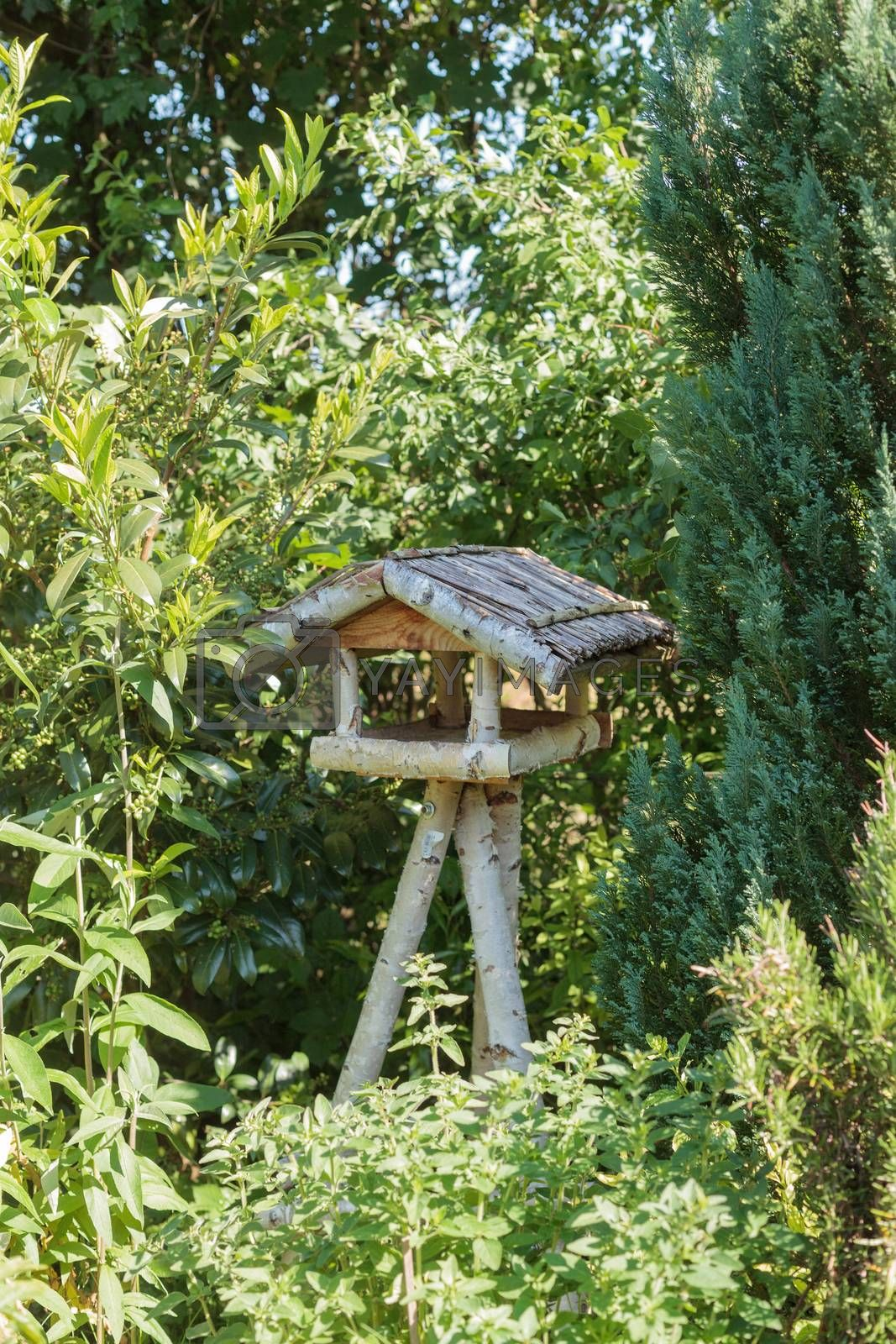 Rustic three-legged wooden bird table made from tree branches with sheltered platform and roof in sunlight surrounded by green trees and shrubs