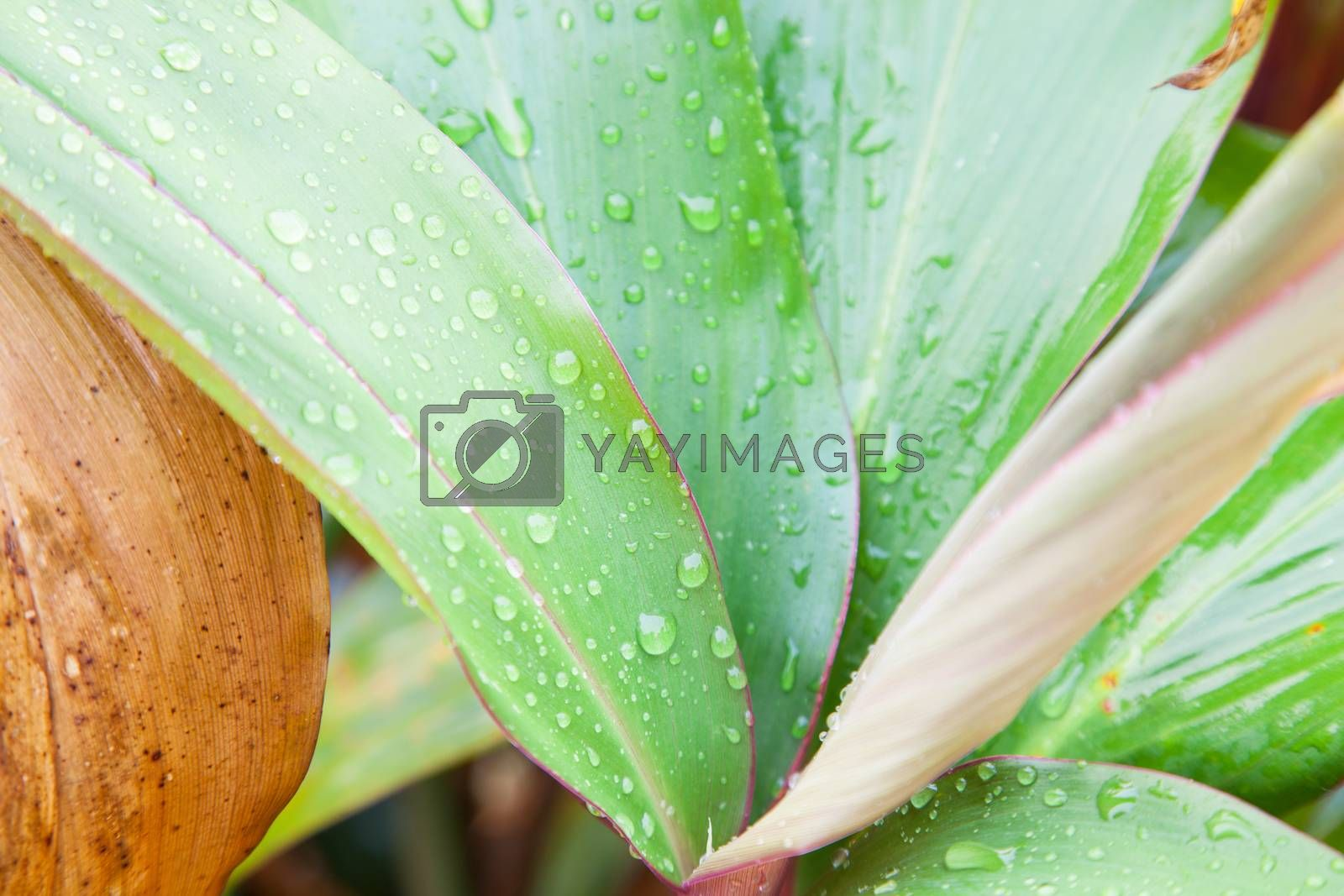 Water droplets on leaves by a454