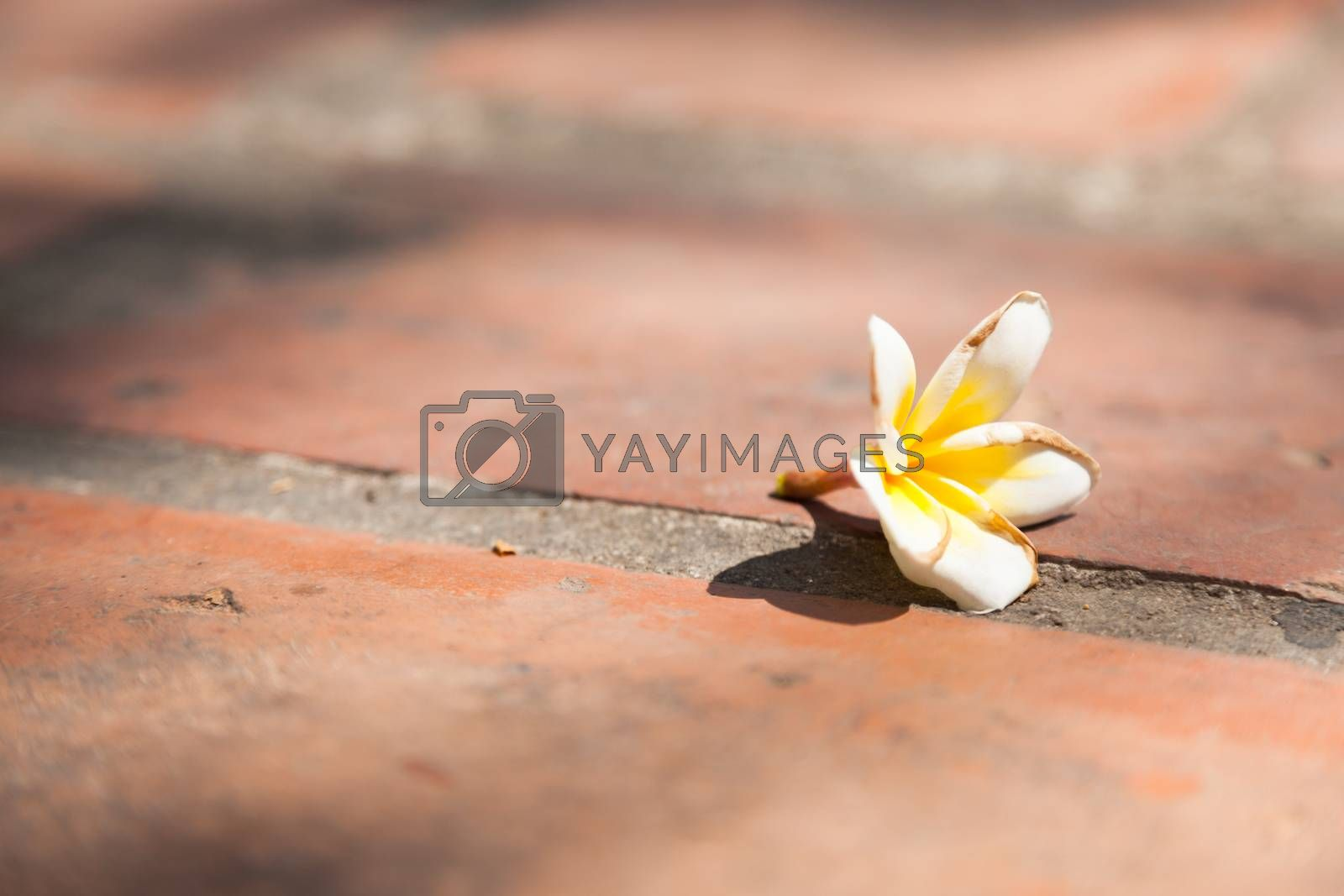 White flower on the ground by a454