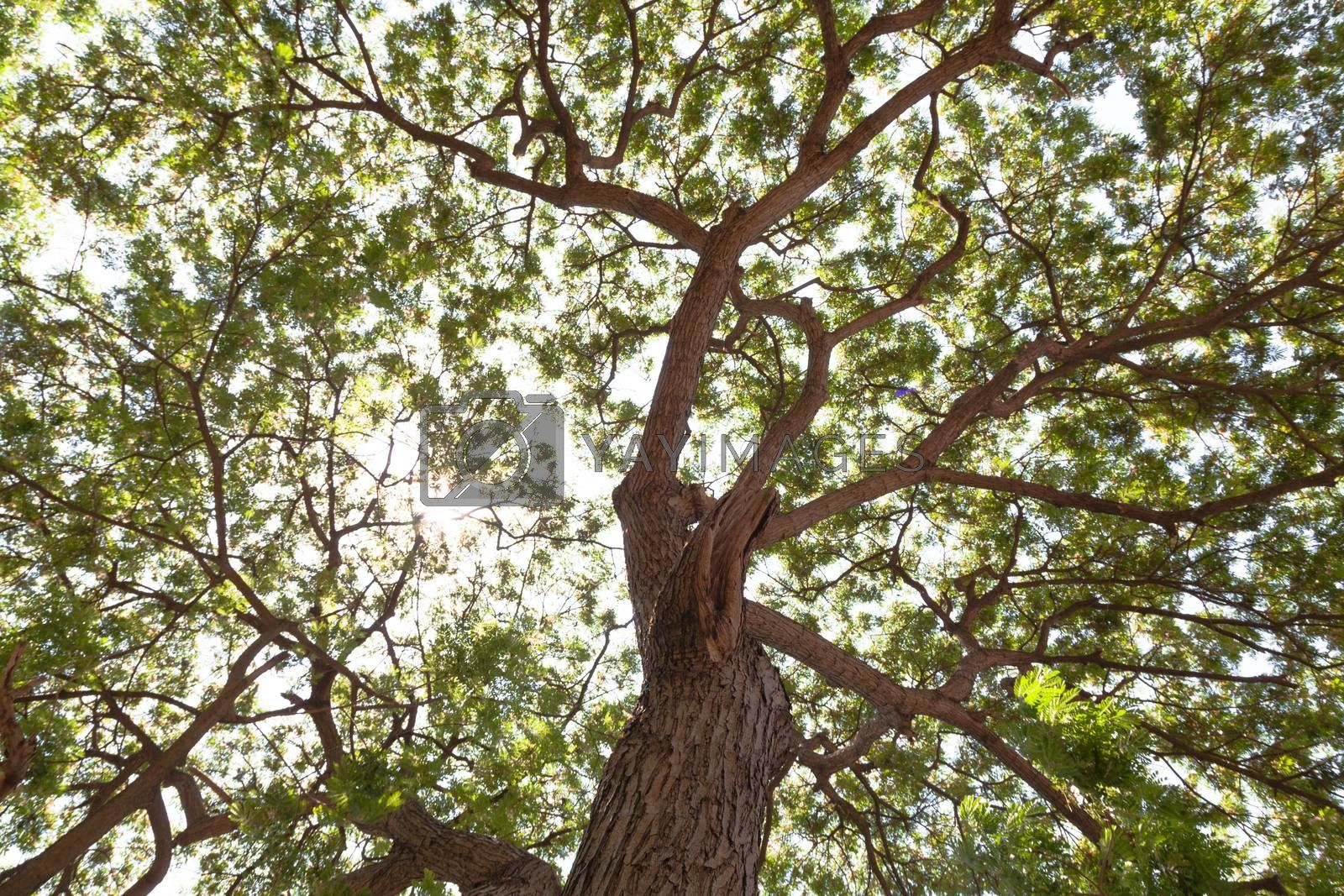 Under the big tree by a454