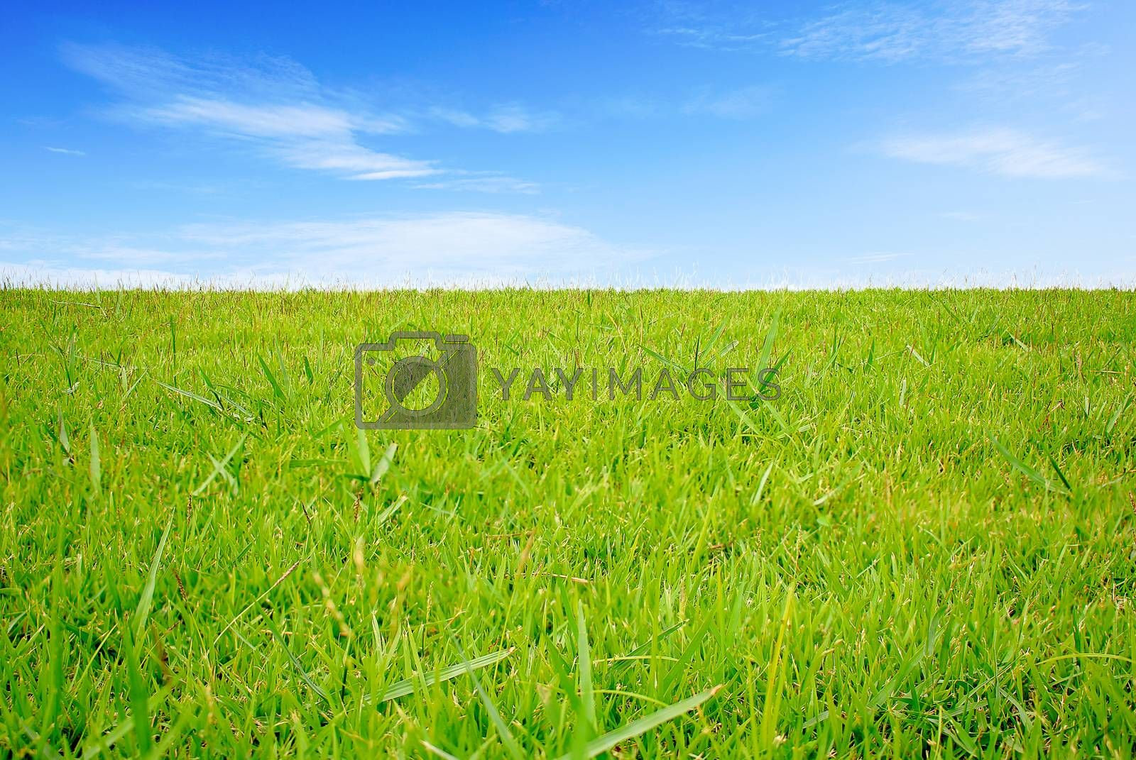Green field under blue clouds sky, Beauty nature background.