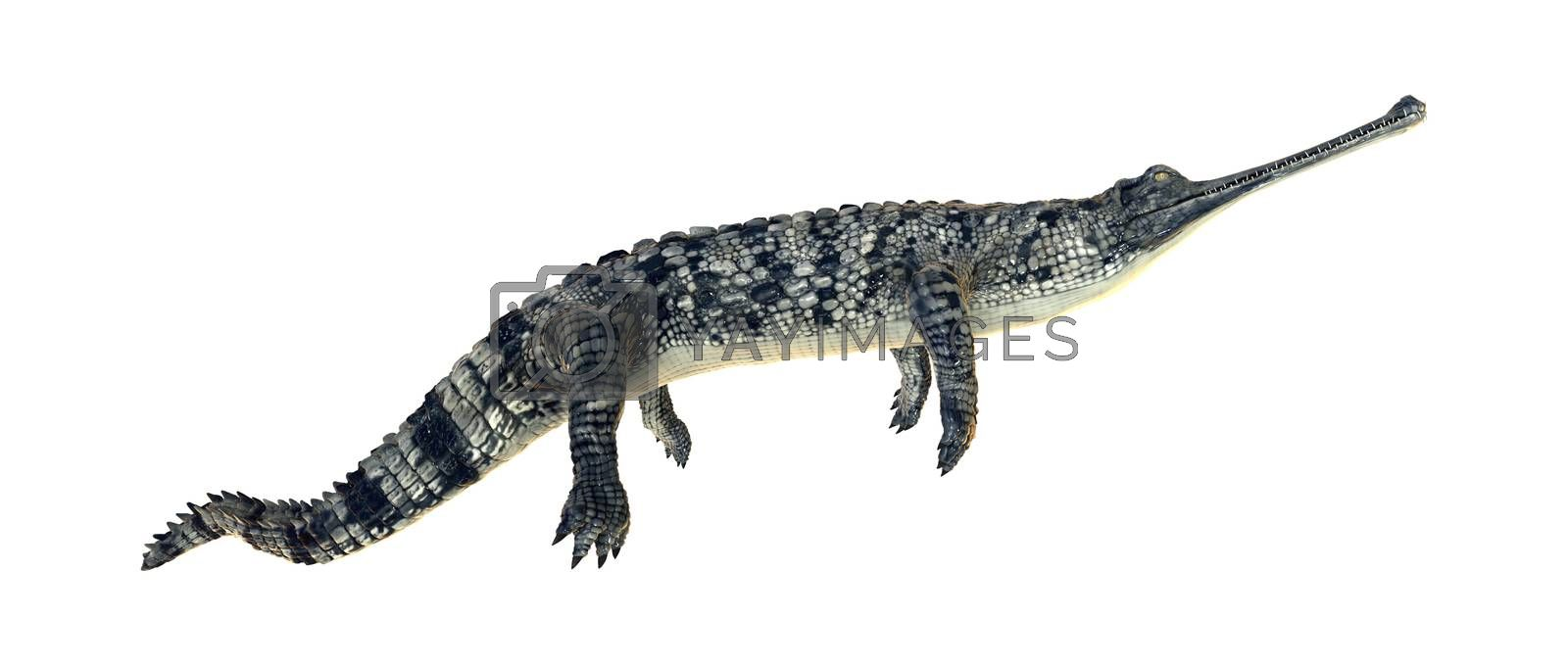 3D digital render of a gharial or Gavialis gangeticus, or gavial, or fish-eating crocodile isolated on white background