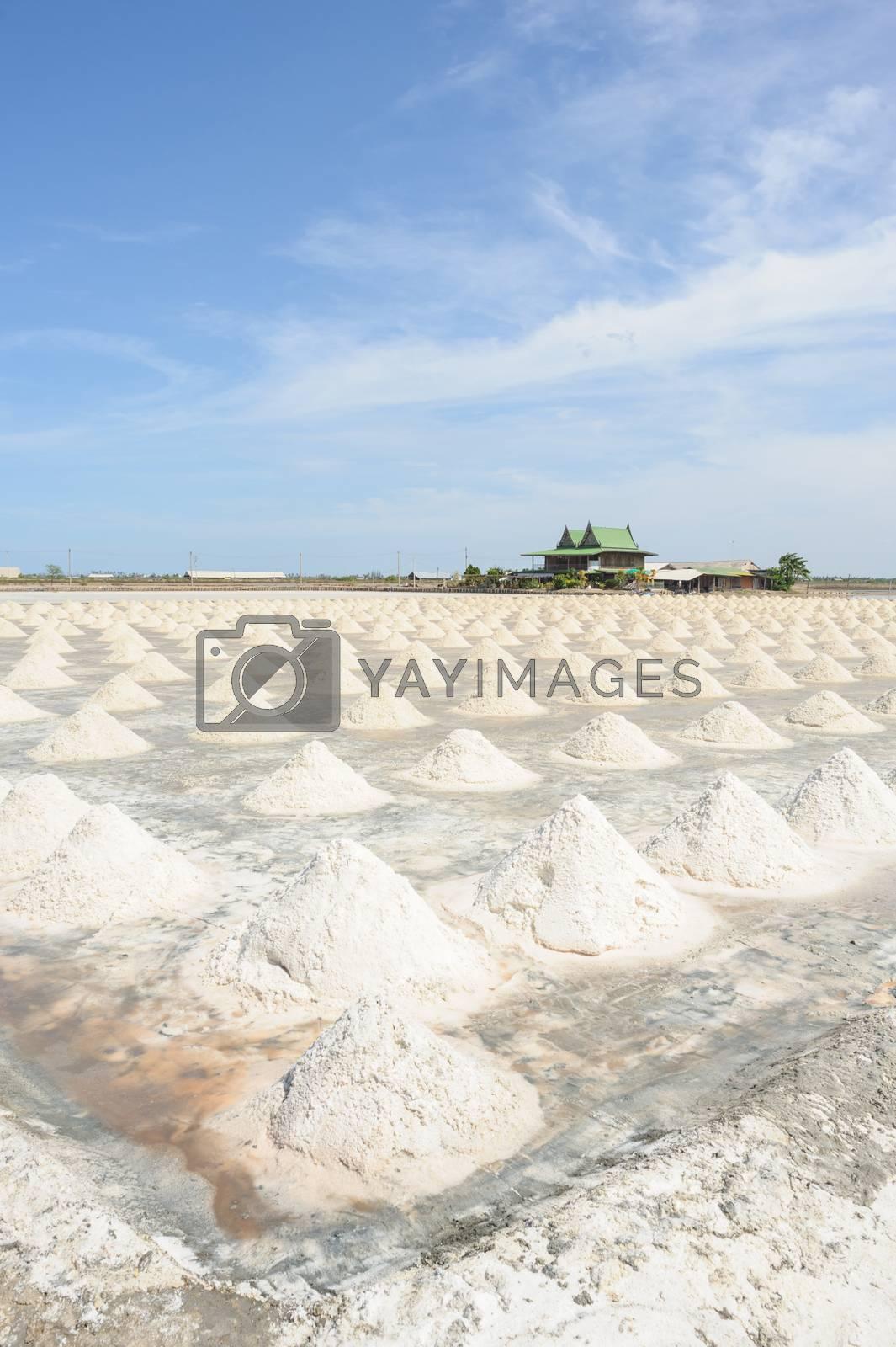 Salt fields in sunny day on SAMUTSAKORN, THAILAND.