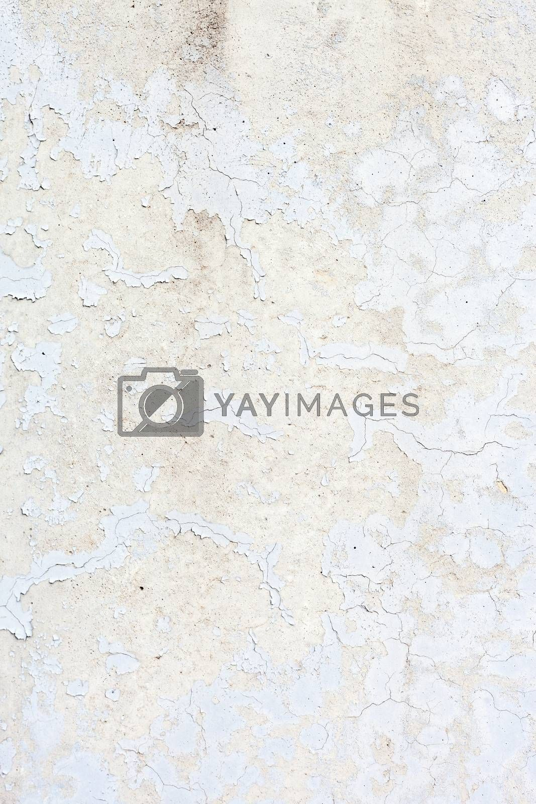 Royalty free image of Grungy White Concrete Wall Background by H2Oshka