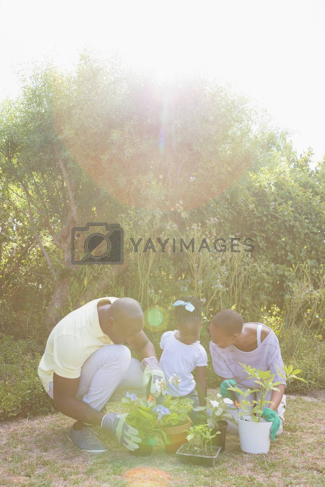 Royalty free image of Happy smiling couple gardening with their daughter by Wavebreakmedia