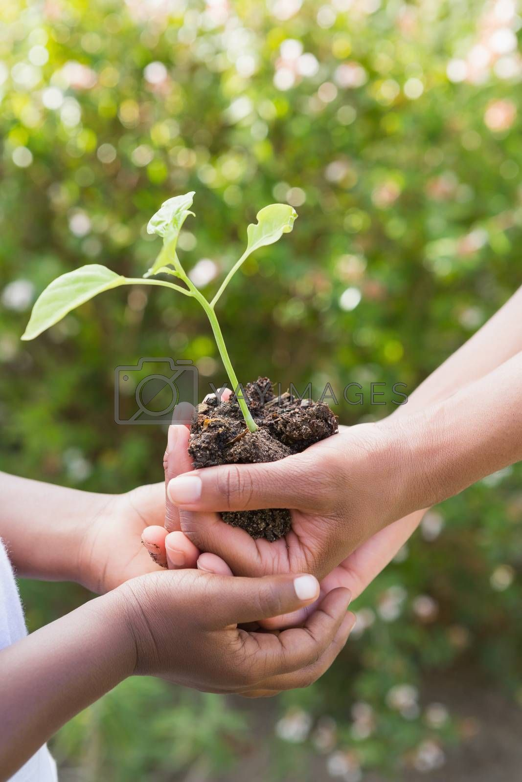 Royalty free image of A woman plant a flower with a child  by Wavebreakmedia