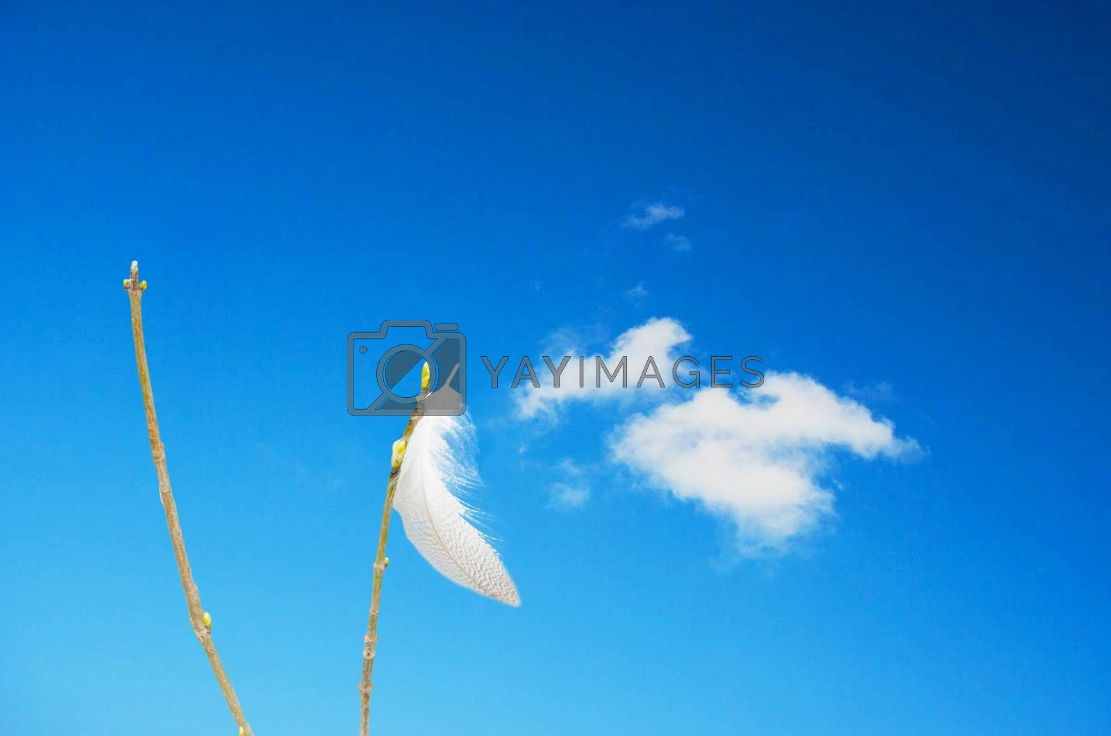 Royalty free image of Spring on blade of grass in front of blue sky by JFsPic
