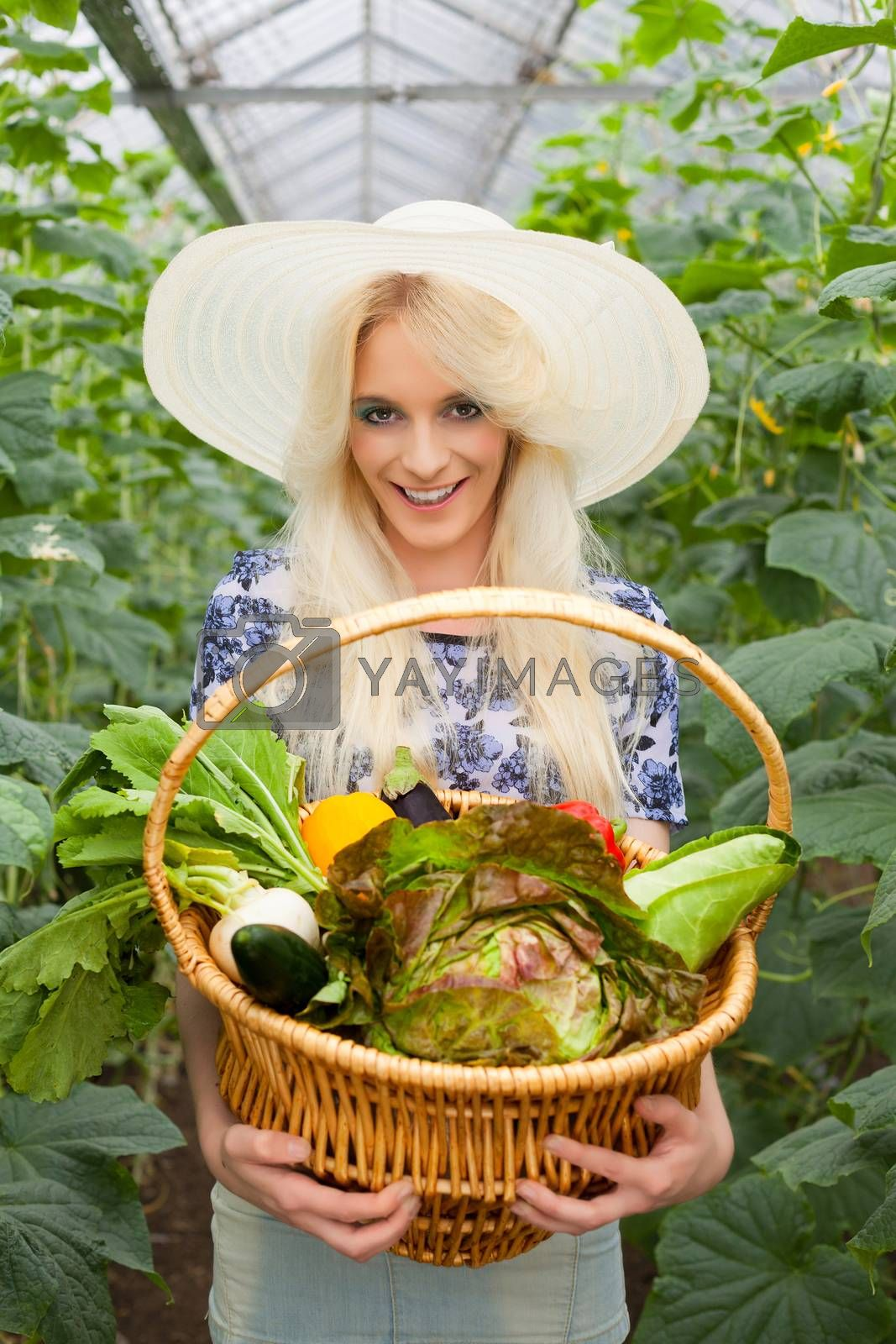 Attractive blond woman wearing a trendy straw sunhat standing holding a basket of fresh farm vegetables in a hot house while looking at the camera with a lovely warm smile