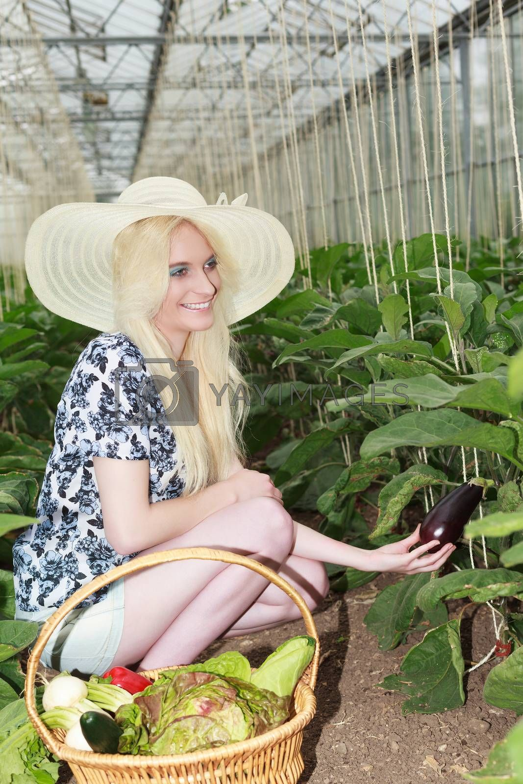 Stylish Blond Young Woman Wearing Straw Hat, Harvesting Healthy Fresh Vegetables In the Farm with Happy Facial Expression.
