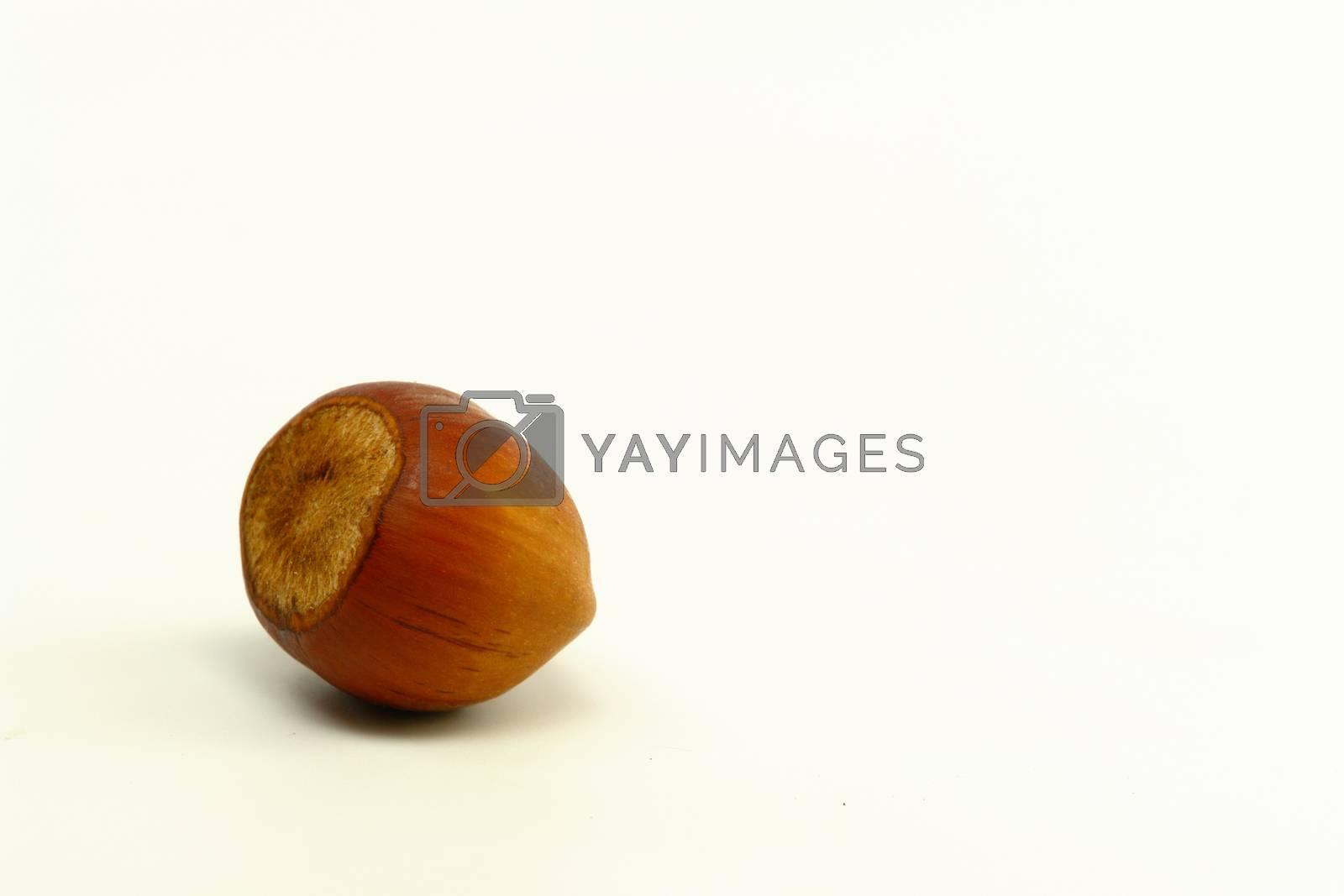 Single Hazelnut