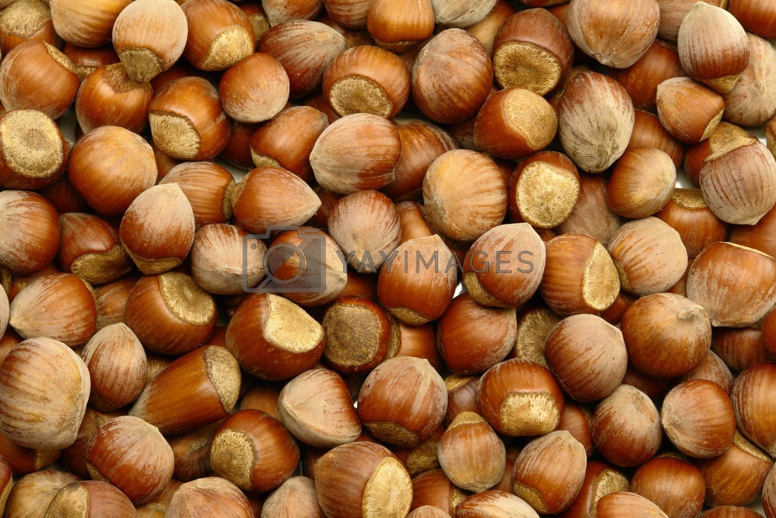 Hazelnut Background