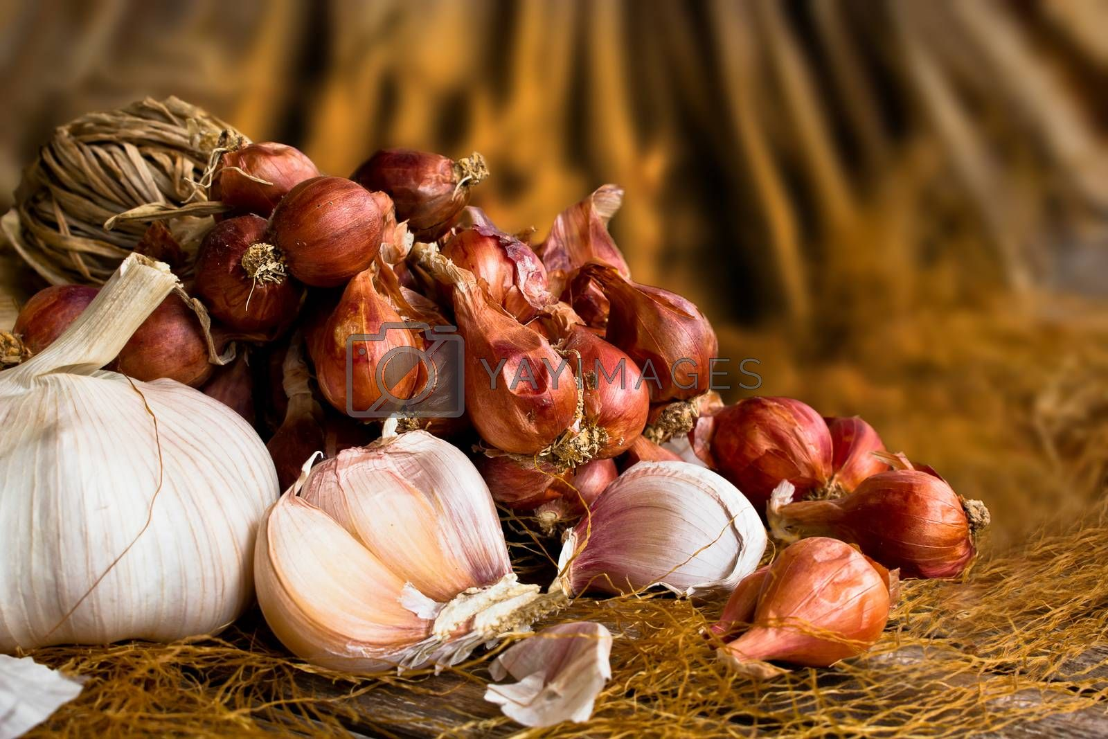 Vintage garlic and onion in still life style