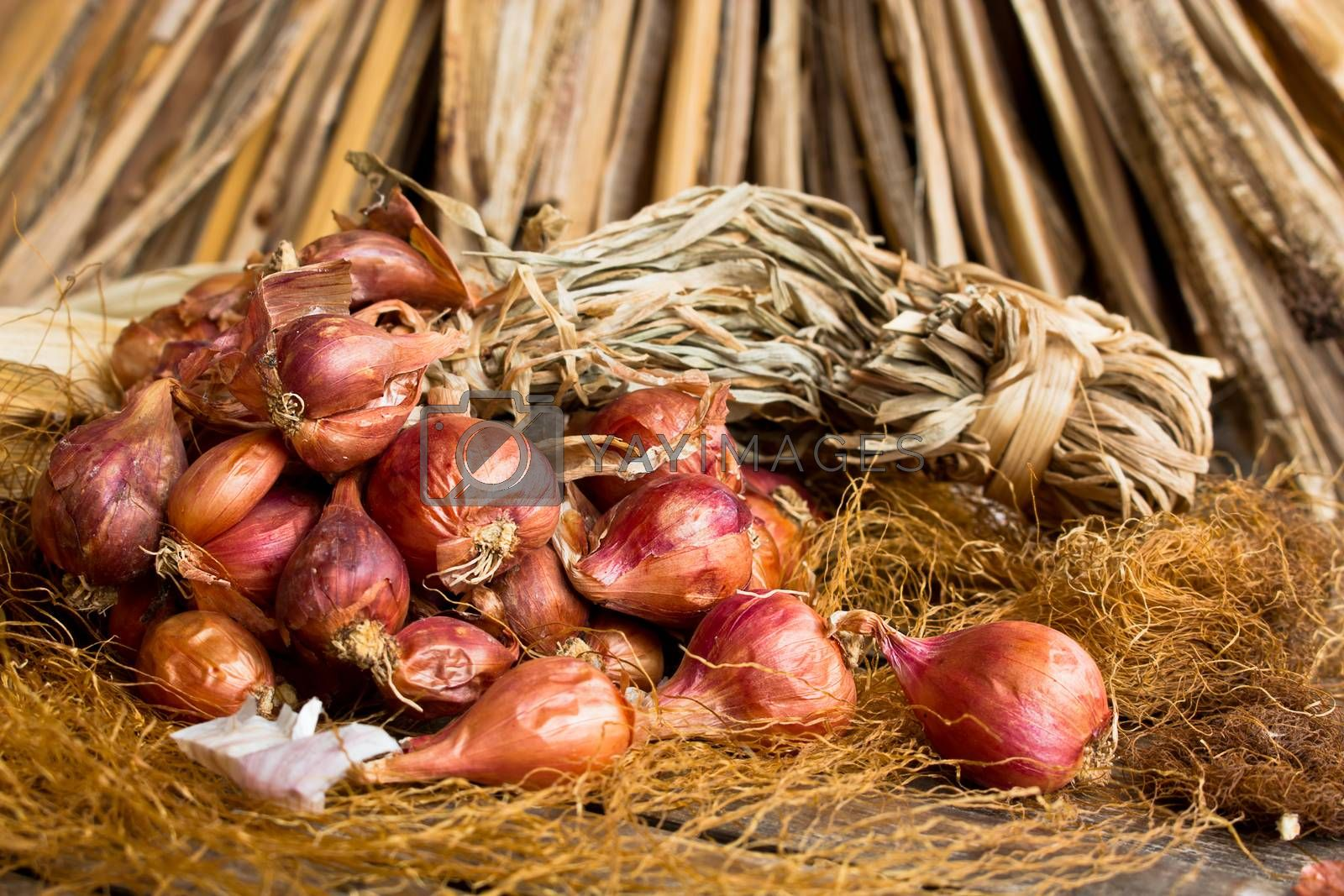 Red onion tuft in still life style
