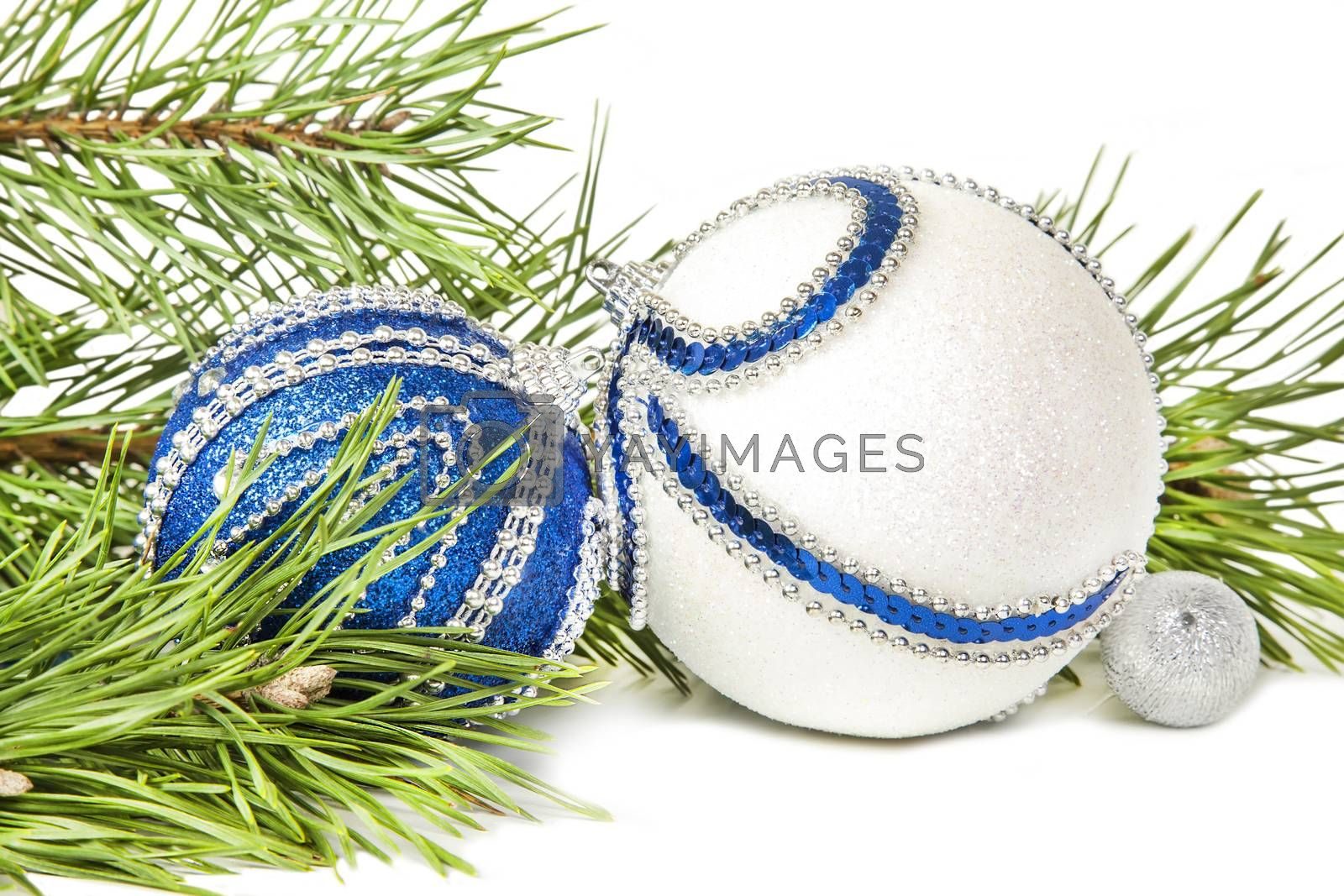 Christmas spruce and blue with white glitter balls isolated