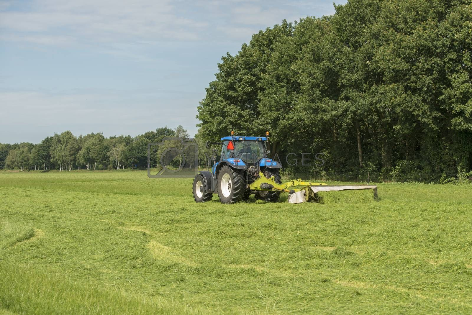 Agriculture, pasture mowing with blue tractor
