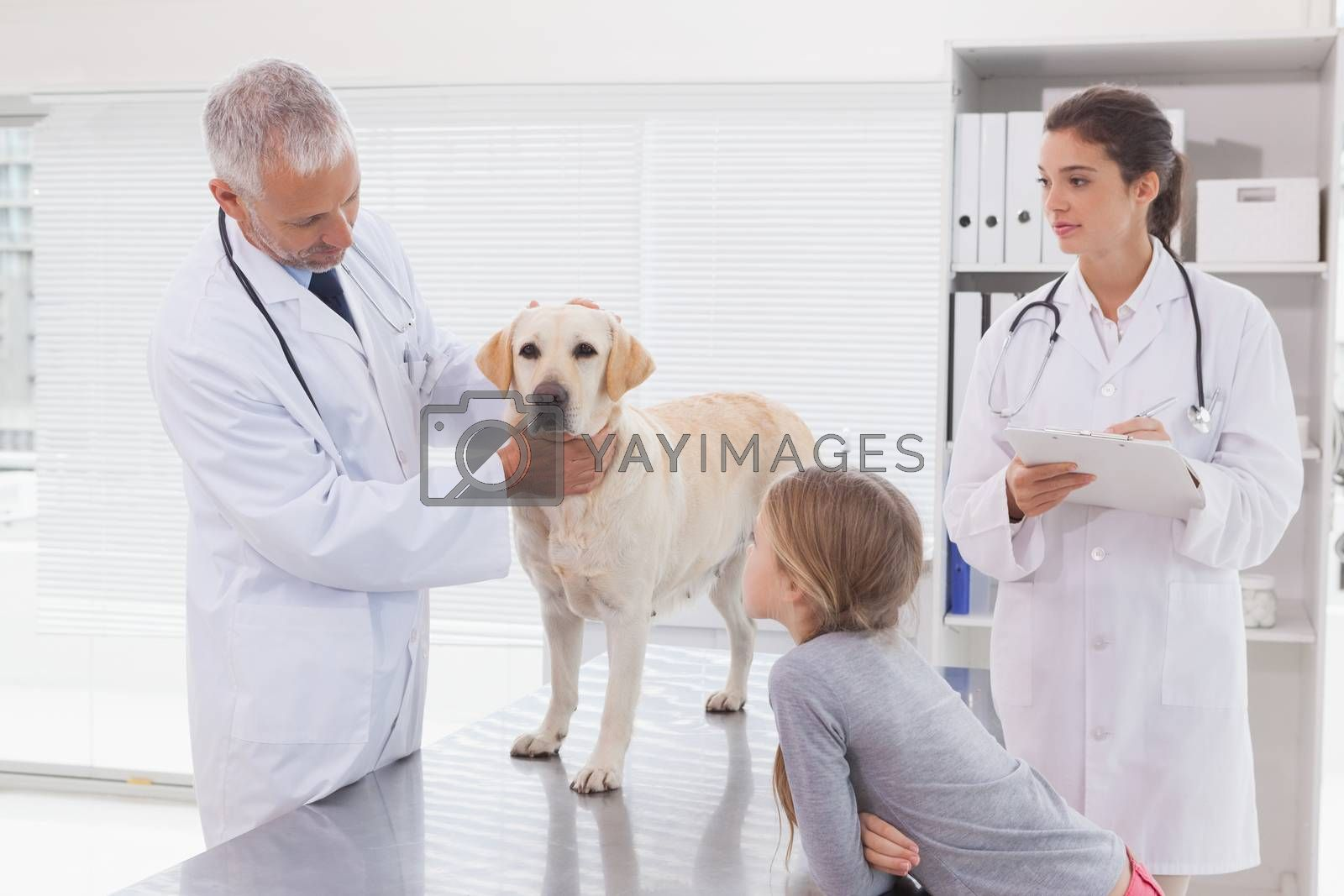 Vet coworker examining a dog with its owner in medical office