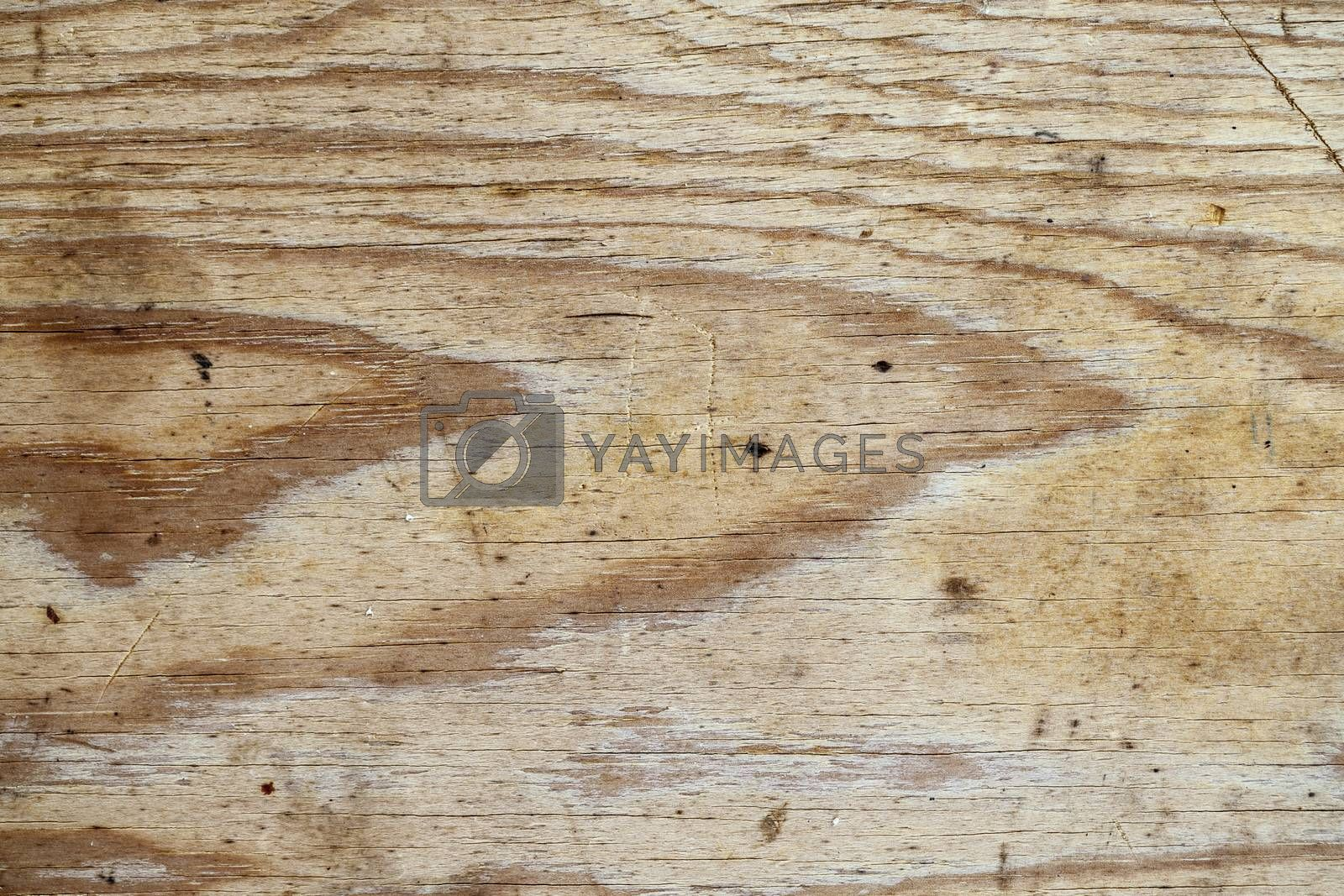The Texture of grunge wood background. Closeup