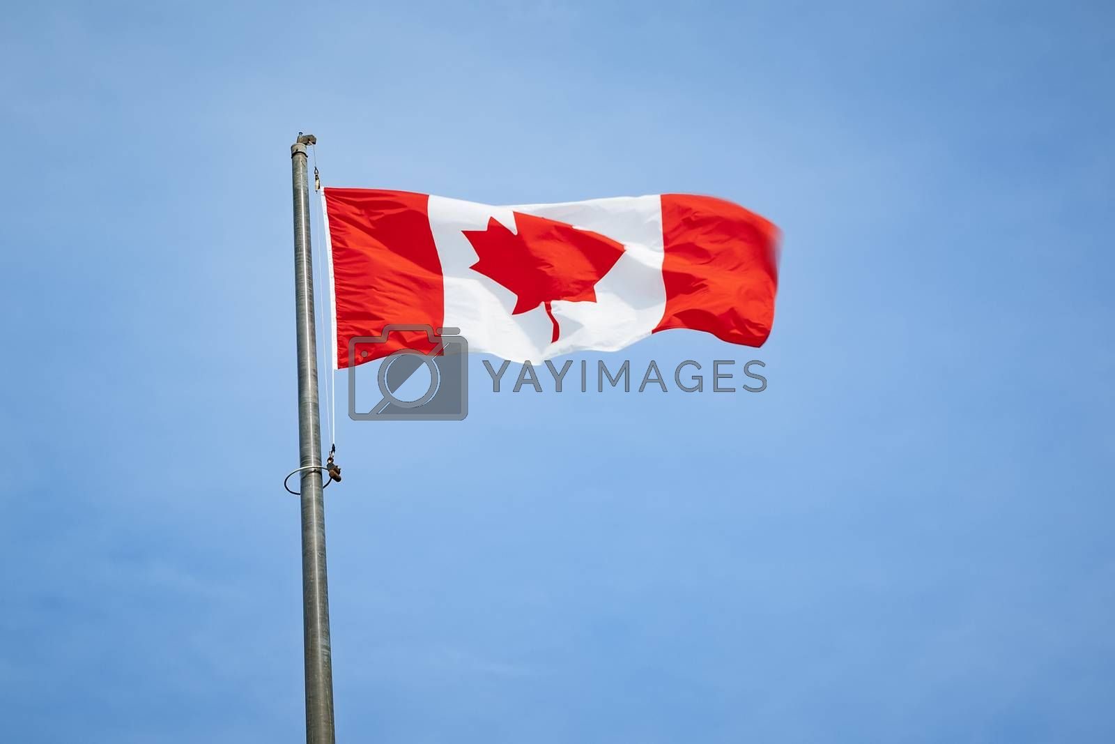 An image of the flag of Canada
