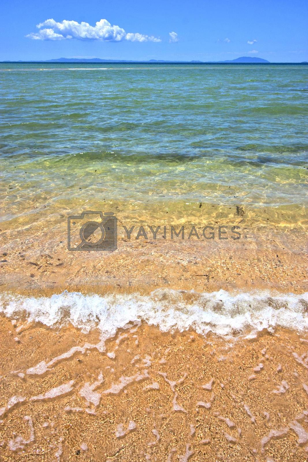 Royalty free image of paradise   seaweed  indian ocean nosy be   and foam by lkpro