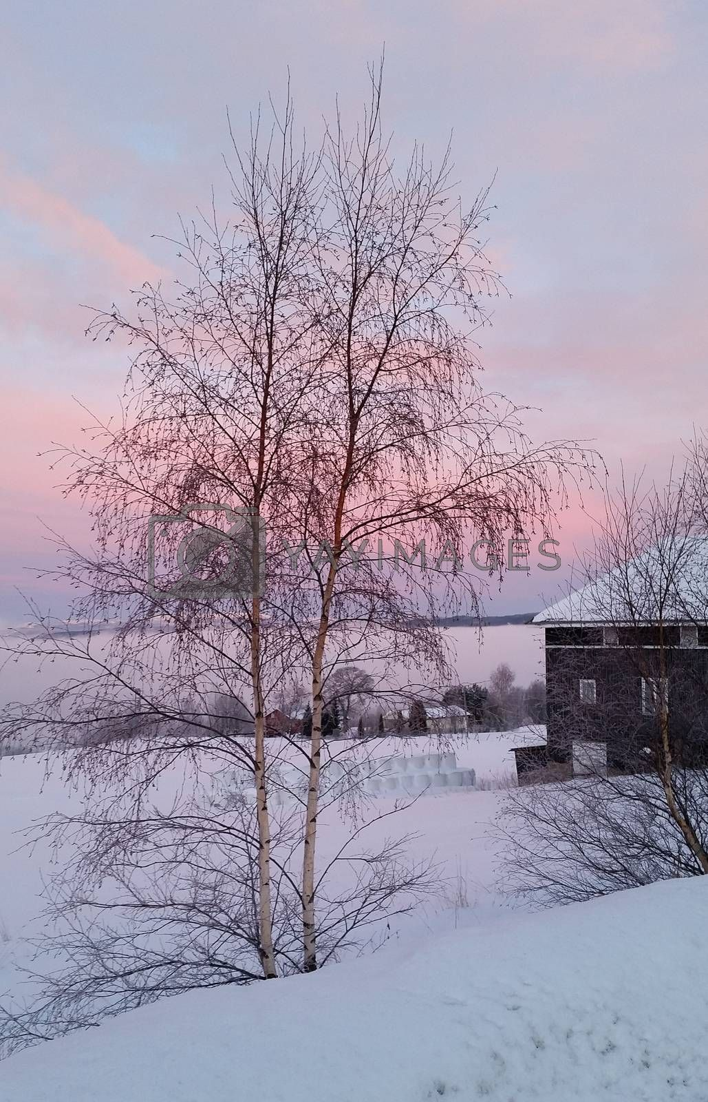 Royalty free image of Winter in Norway by camillaholm