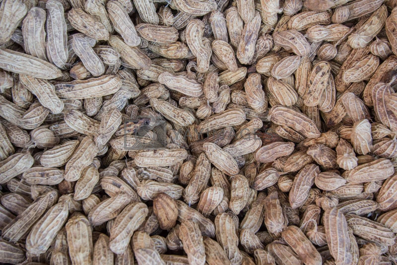 Royalty free image of Many peanuts in shells, one upon the other  by kritsada1992
