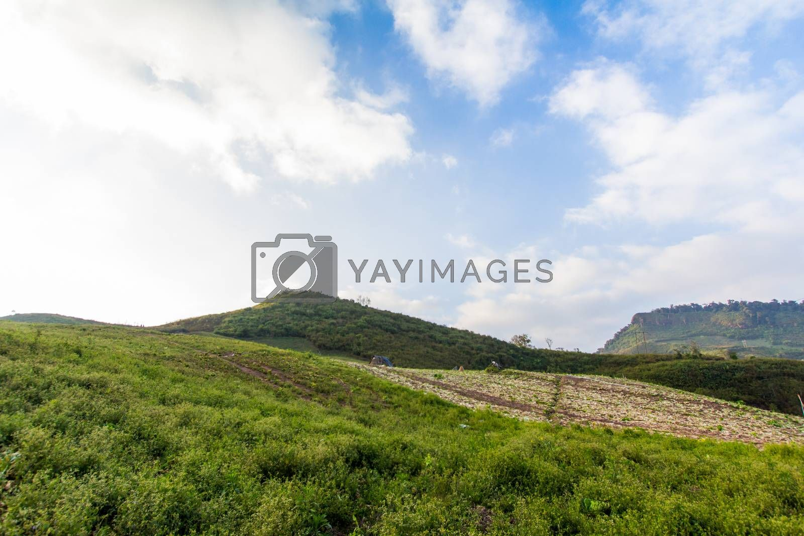 Royalty free image of mountain landscape  by kritsada1992