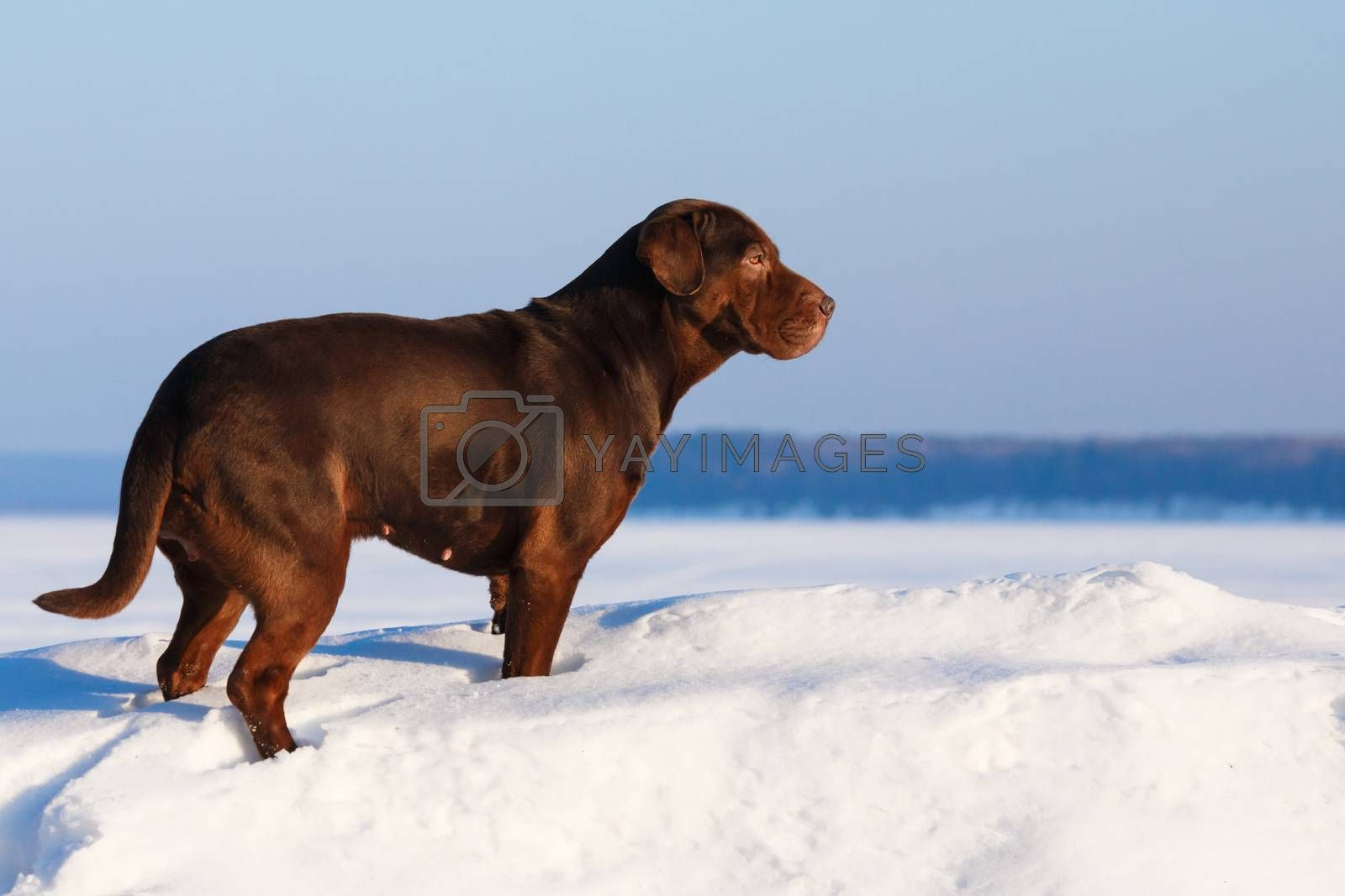 Royalty free image of Dog at sunny day by maxsol