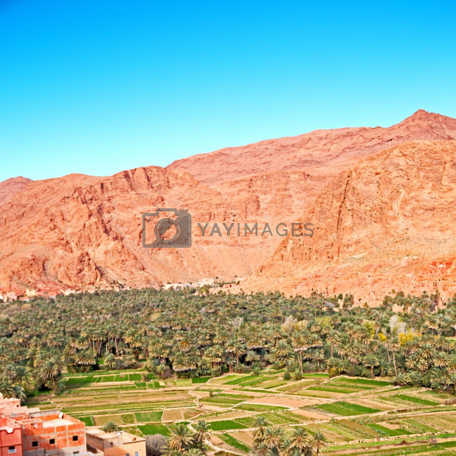 Royalty free image of  in todra gorge morocco africa and  village by lkpro