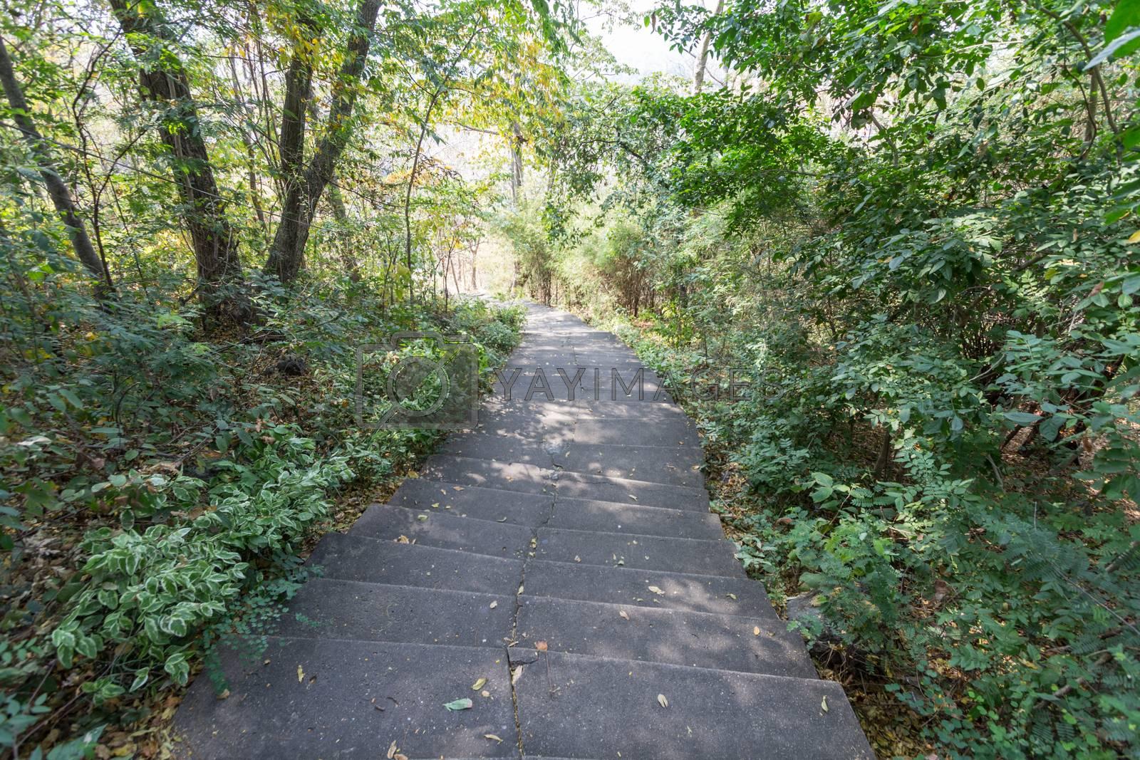 Royalty free image of green path by kritsada1992