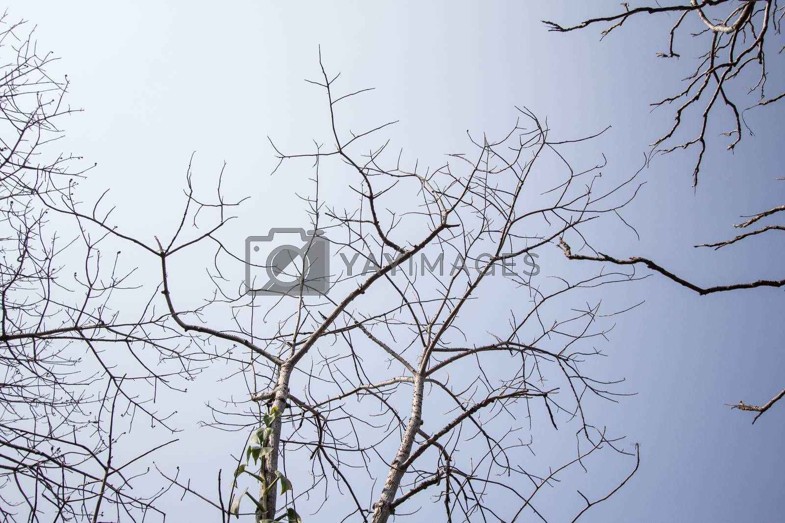 Royalty free image of sky and trees  by kritsada1992