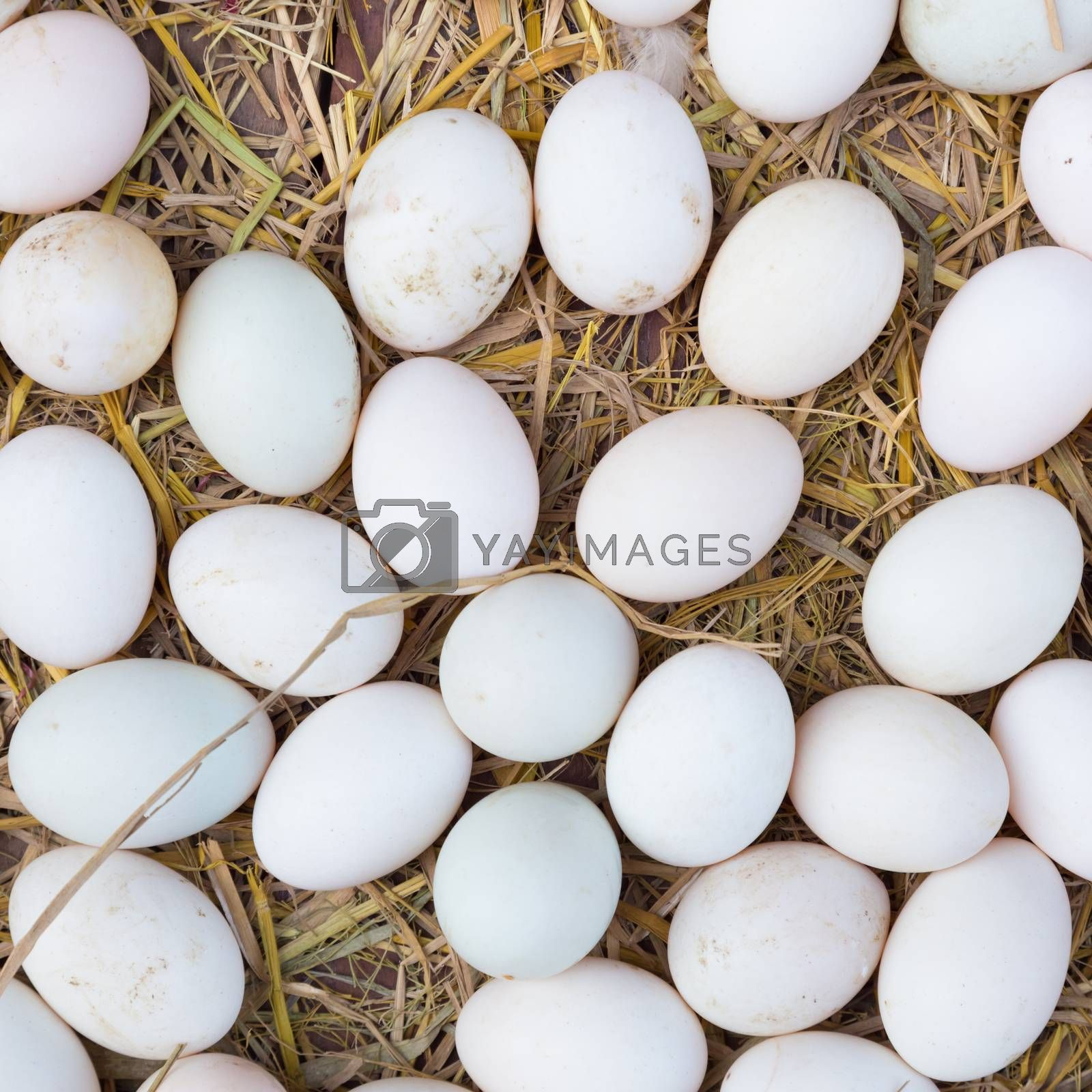 Royalty free image of White eggs on a hay. by kasto