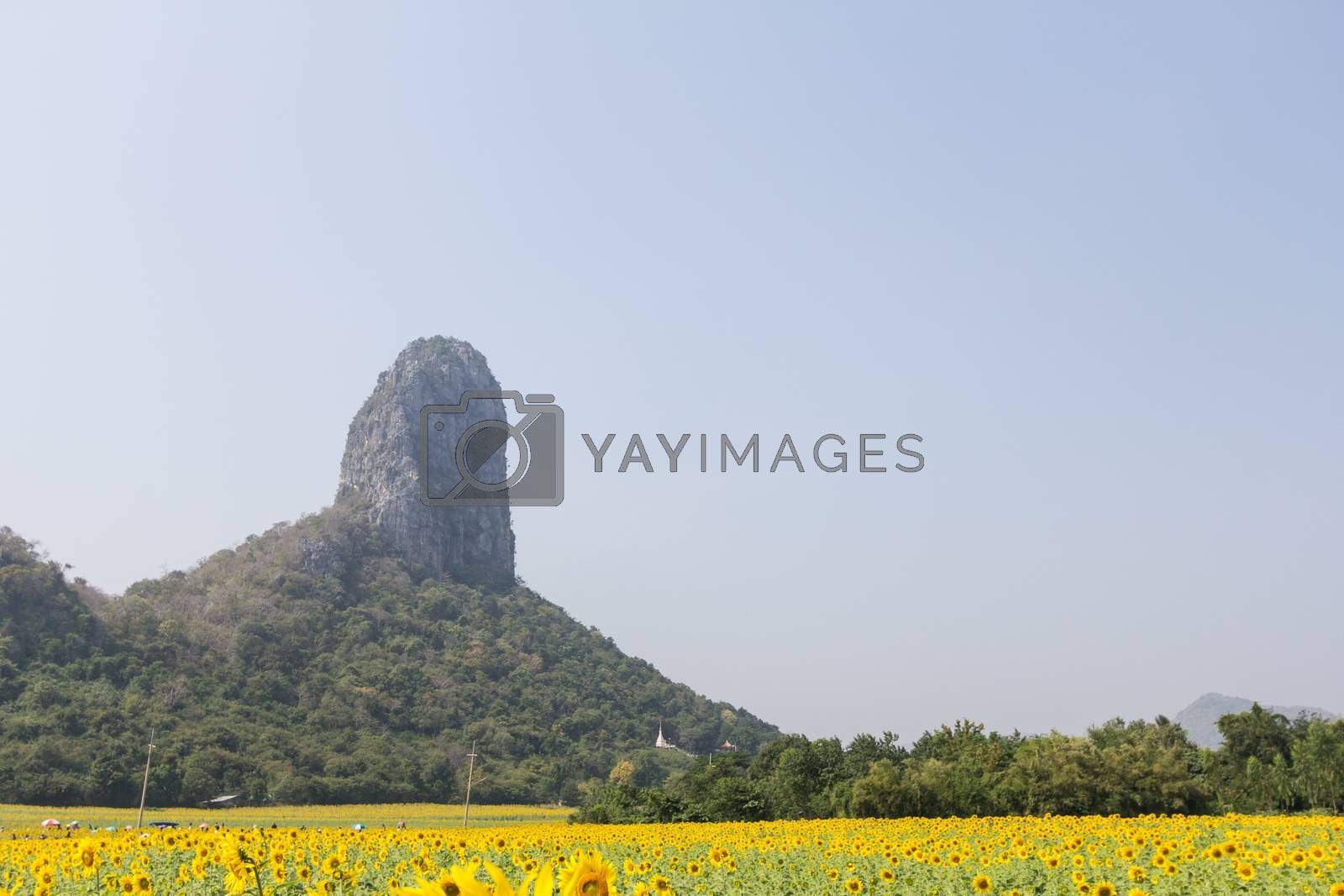 Royalty free image of sunflower field and tree mountain by kritsada1992