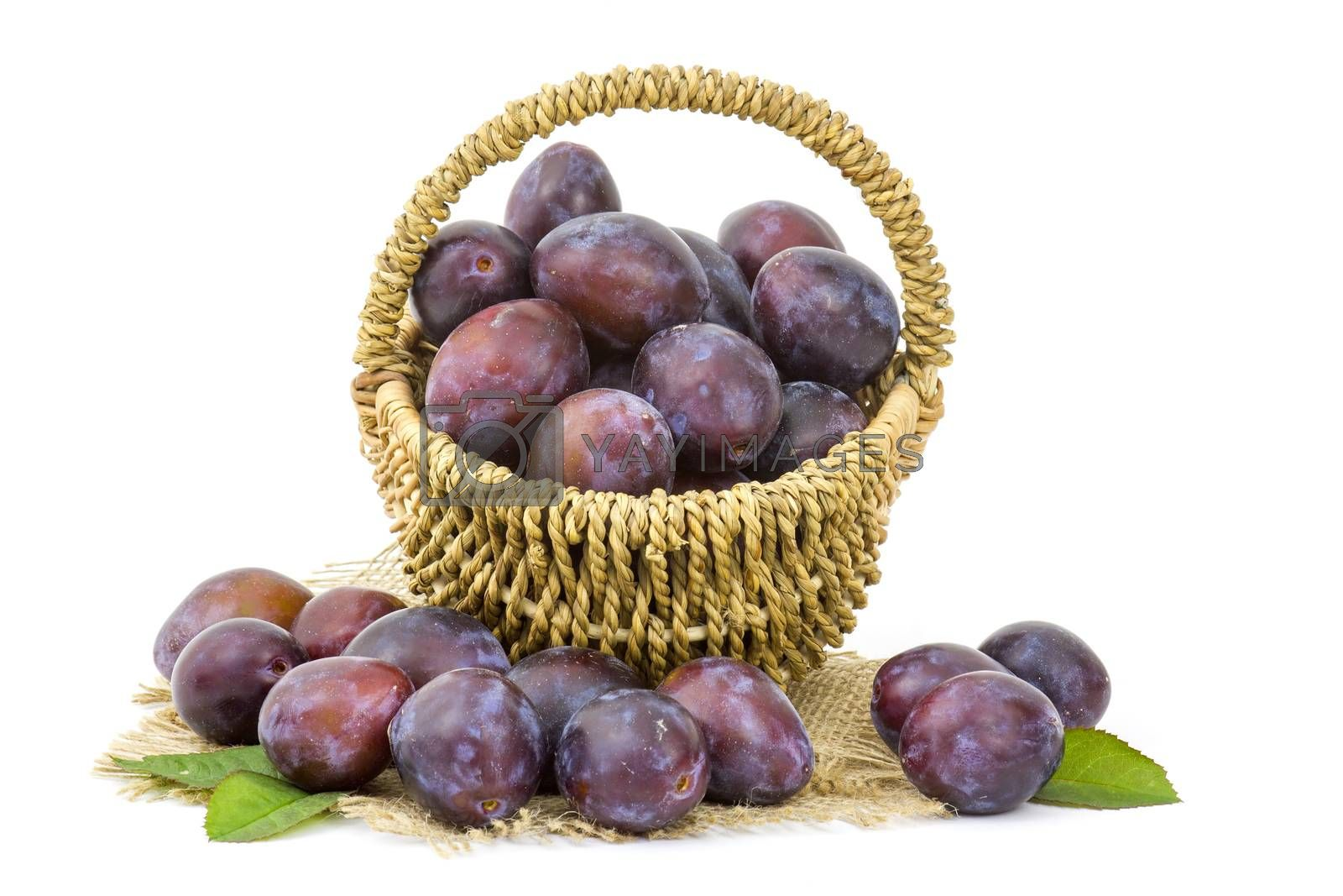 fresh plums in a basket on white background