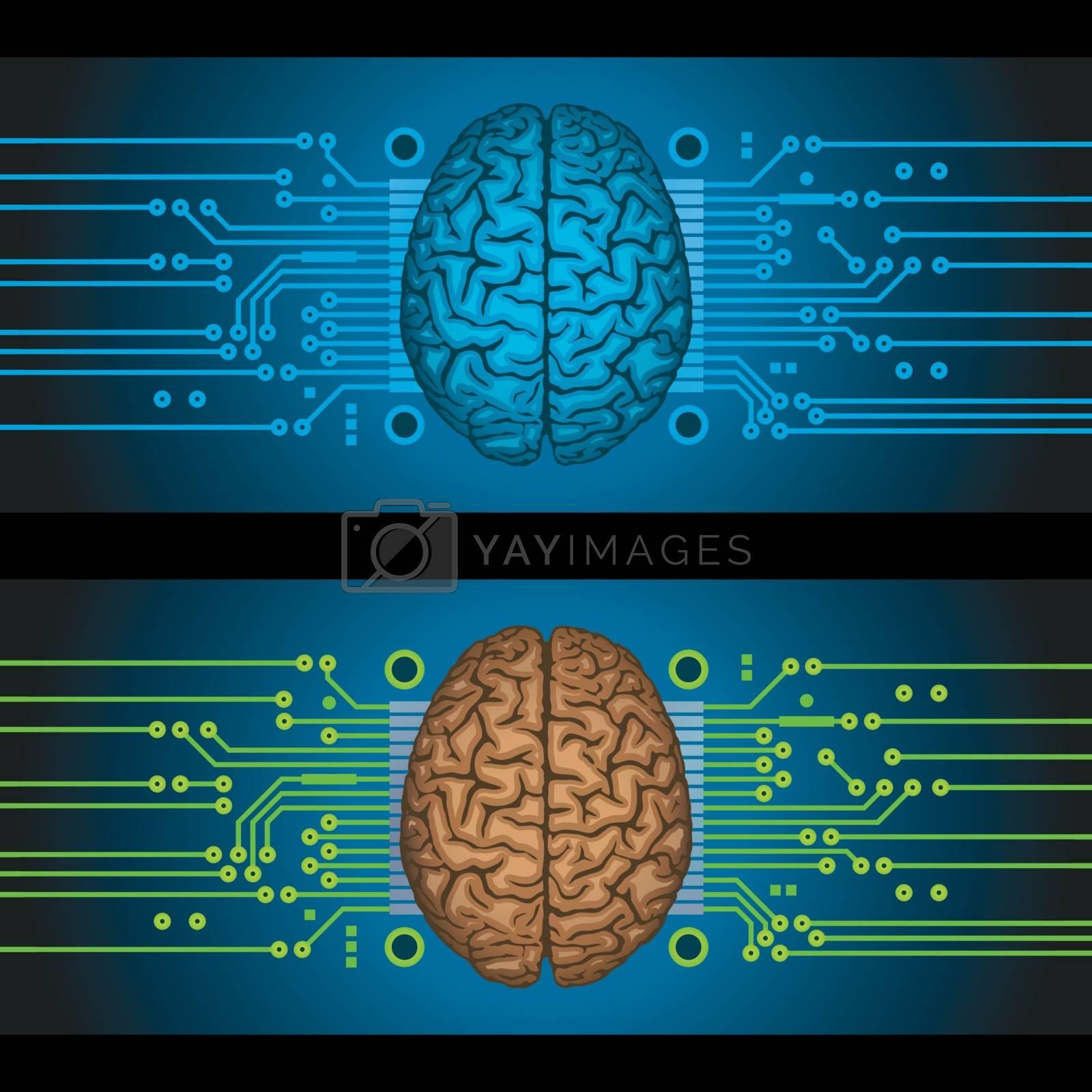 Vector illustration of the human brain.