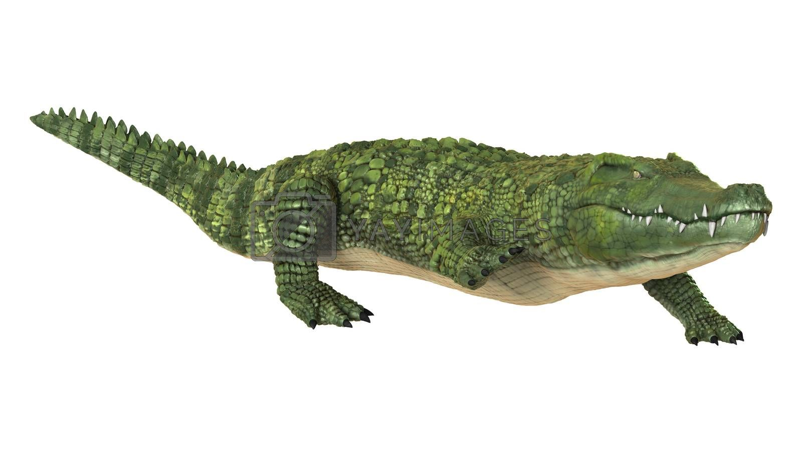 3D digital render of a green crocodile isolated on white background