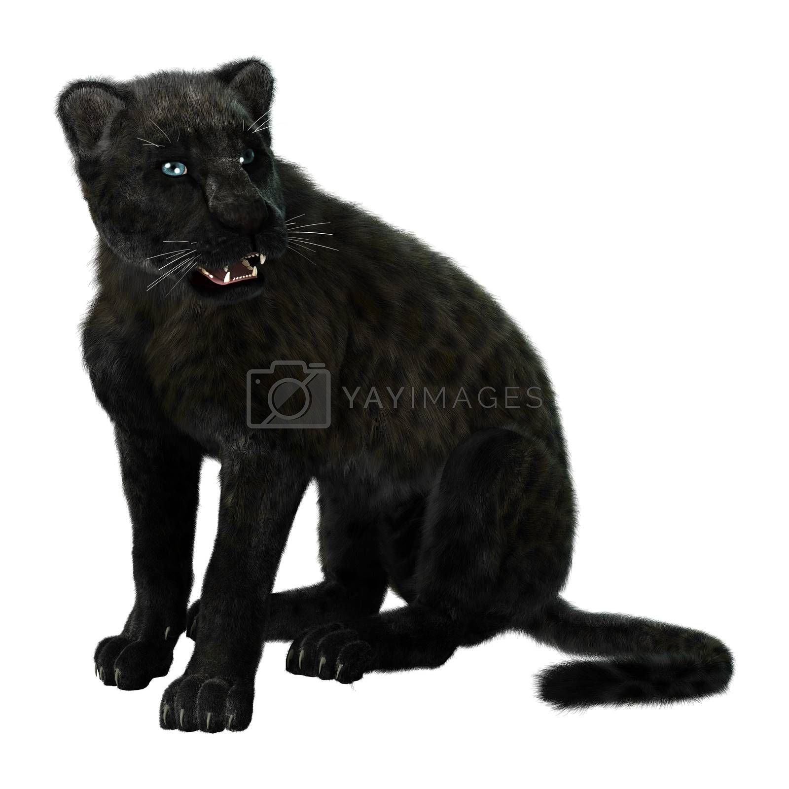 Big Cat Black Panther by Vac