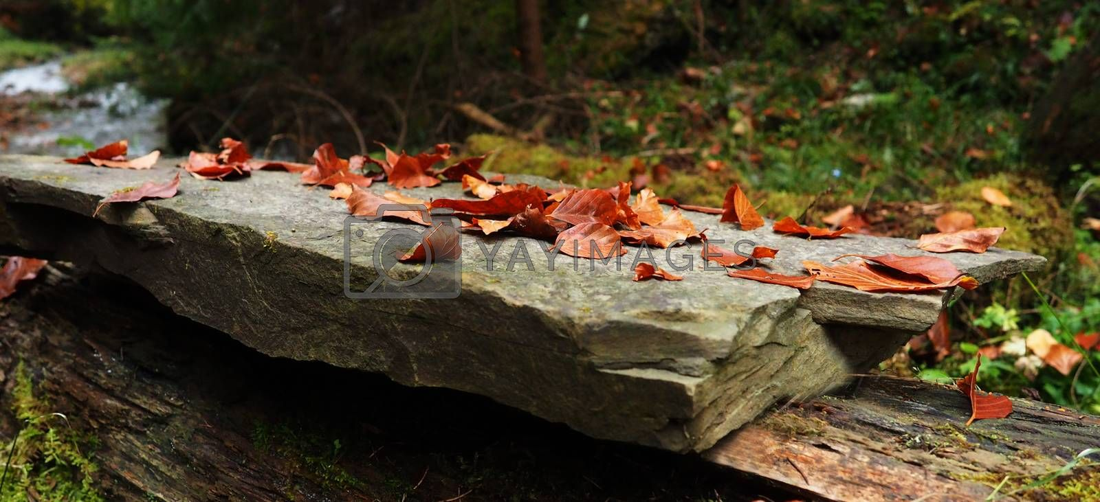 Autumn leaves on a rock near a mountain river