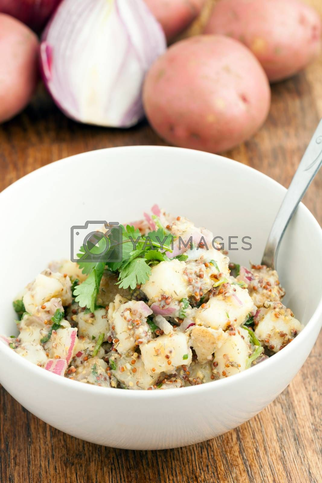 Potato salad freshly homemade without mayonaise.  Ingredients include cilantro olive oil vinegar whole grain dijon mustard red onions and potatoes.