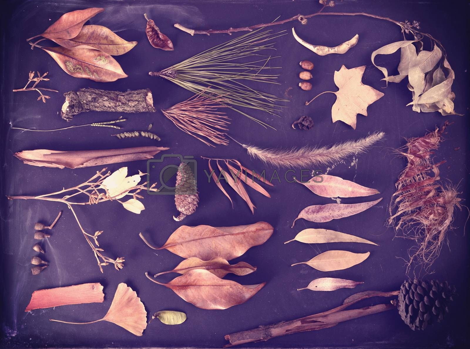 Fall season composition autumn nature elements on blackboard background. Includes ginkgo leaf, pine cone, bark and branches.