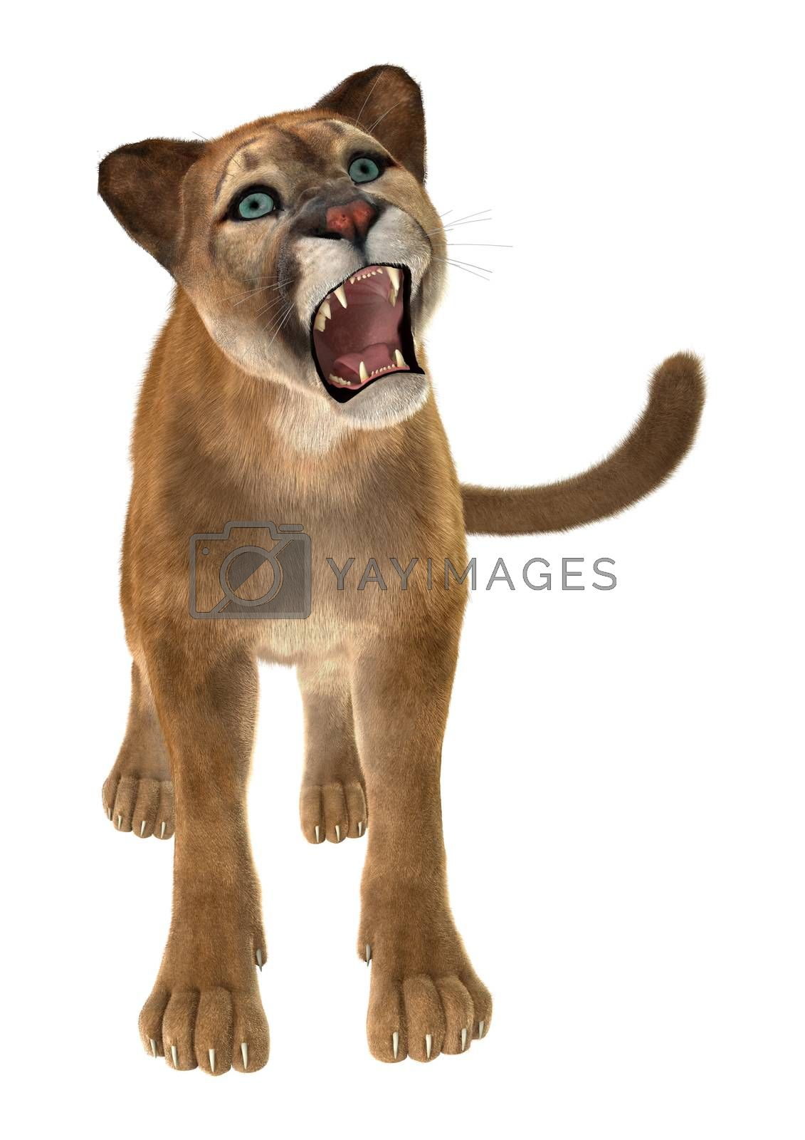 3D digital render of a big cat puma isolated on white background