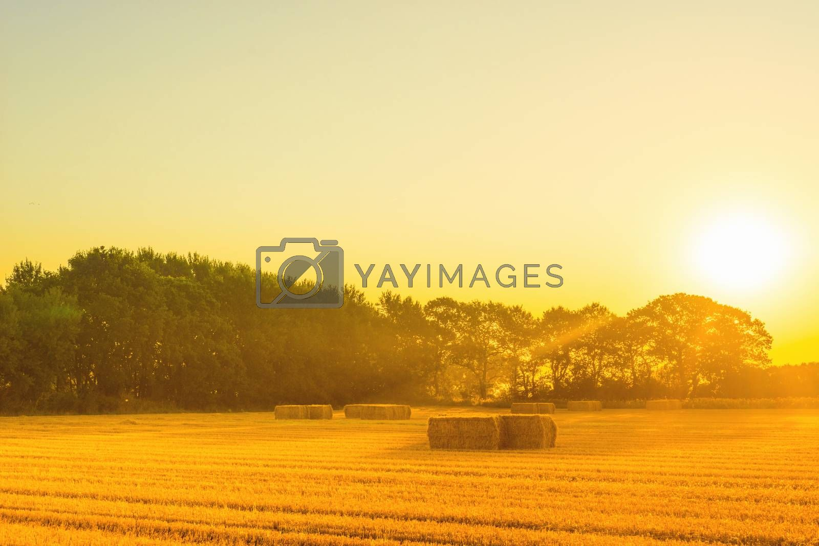 Countryside landscape with straw bales in the summer