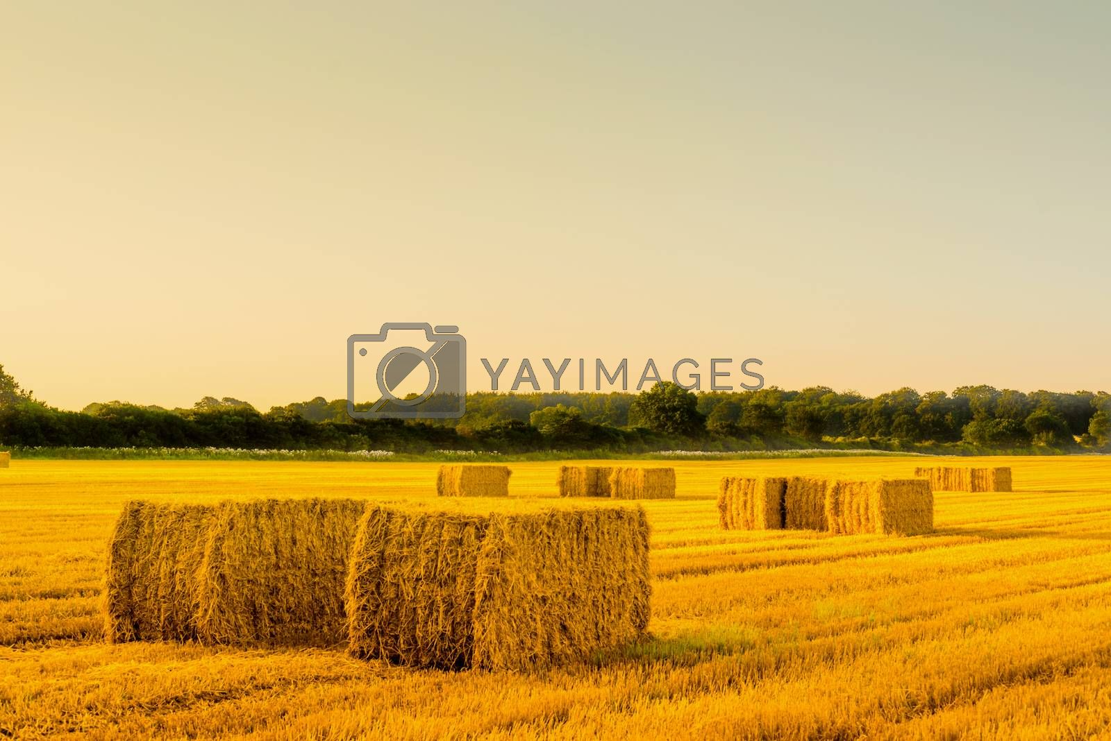 Straw bales in a countryside landscape in the morning